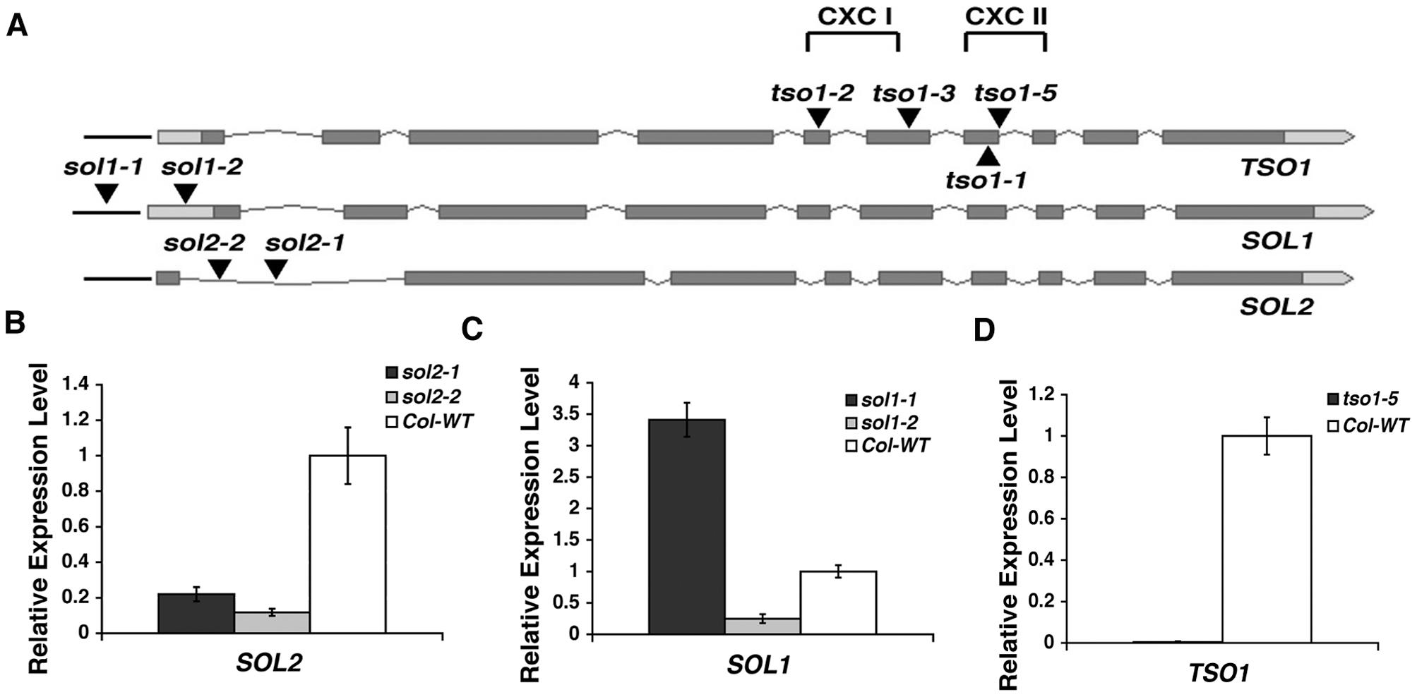 Analyses of T-DNA insertion lines in <i>TSO1</i>, <i>SOL1</i>, and <i>SOL2</i>.