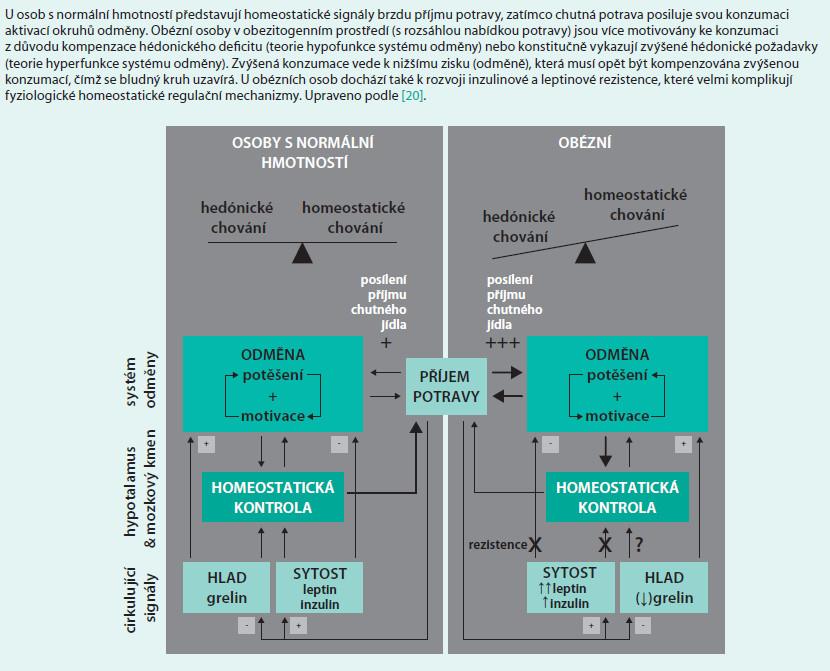 Schéma 12. Rozdíly v homeostatickém a hédonickém řízení příjmu potravy mezi osobami s normální hmotností a obézními