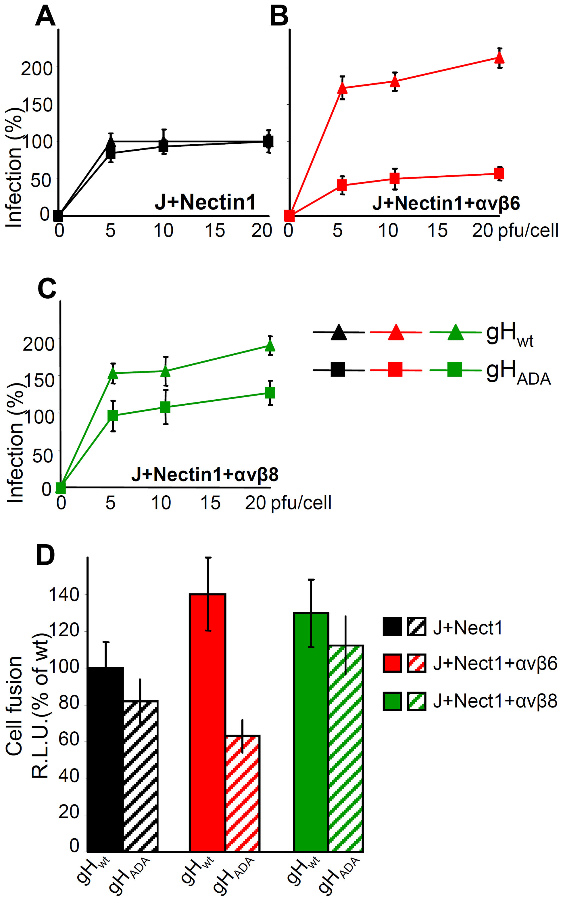 The RGD motif in gH is required for HSV infection and cell-cell fusion mediated by αvβ6–integrin, but not by αvβ8–integrin.