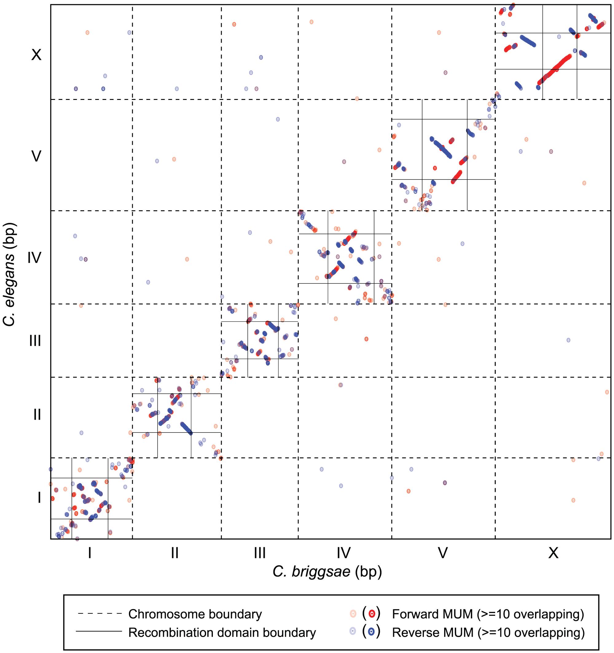 Chromosome synteny between <i>C. elegans</i> and <i>C. briggsae</i>.