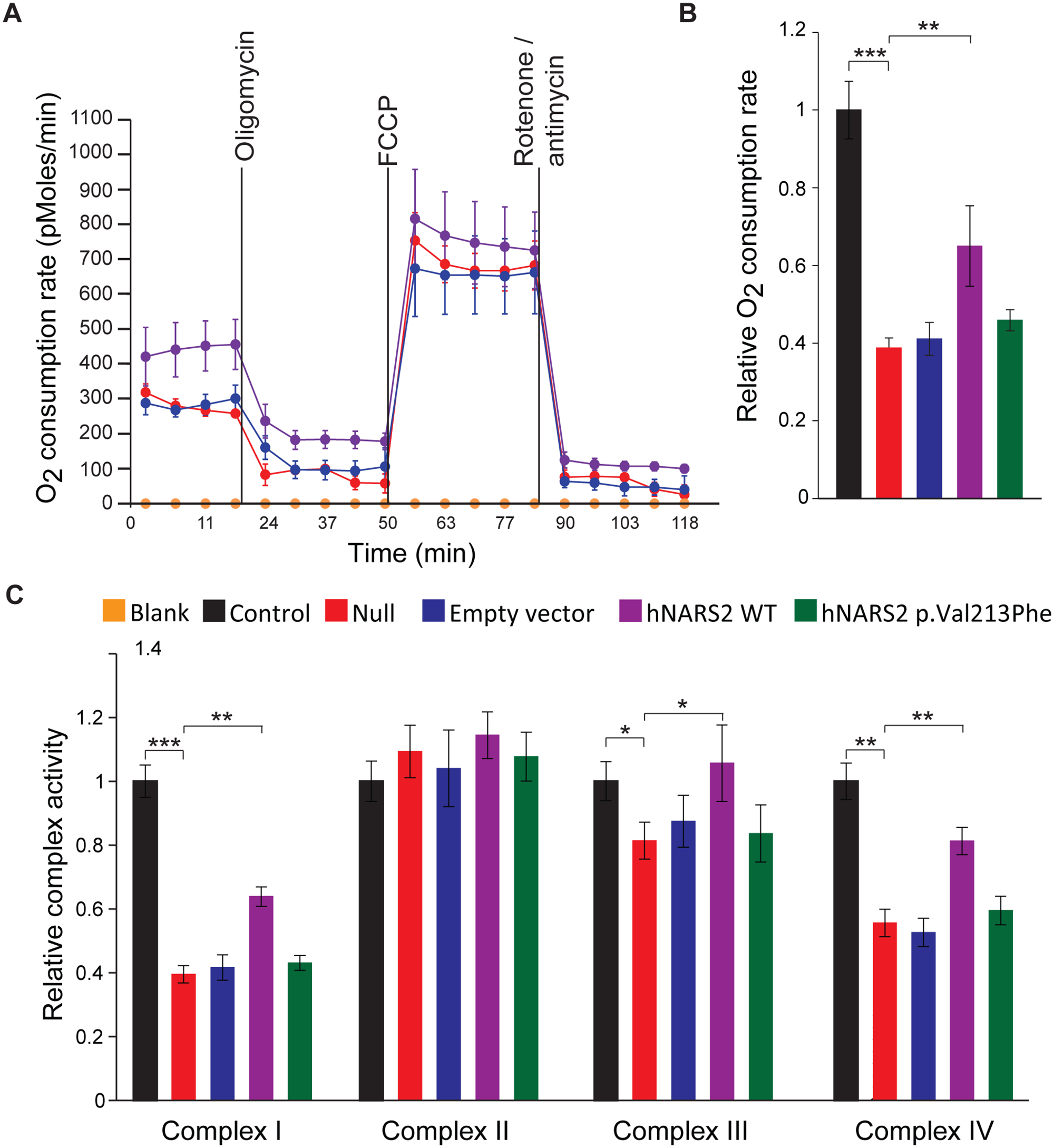 Analysis of the impact of the NARS2 mutations on mitochondrial functions.