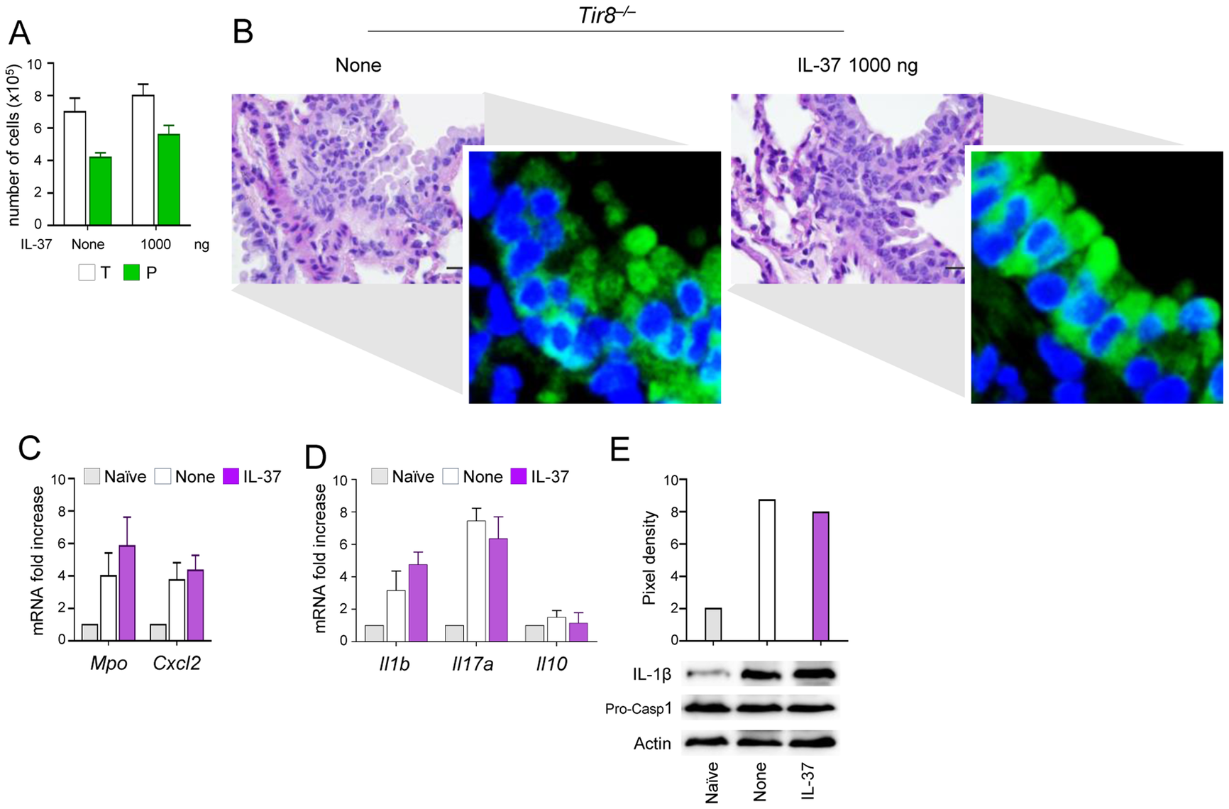 IL-37 fails to inhibit inflammasome activation in <i>Tir8<sup>−/−</sup></i> mice.