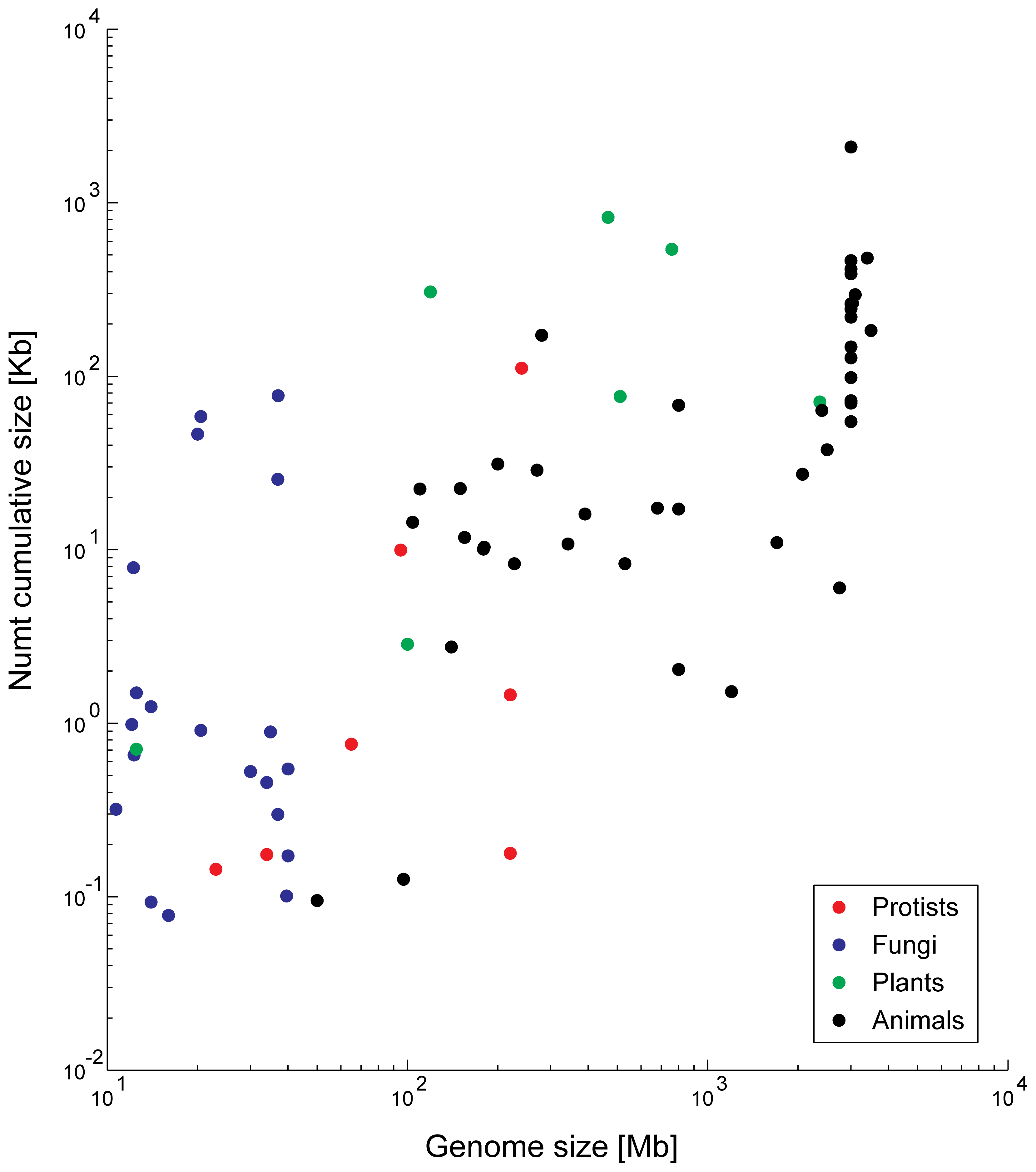 <i>Numt</i> content is correlated to genome size.