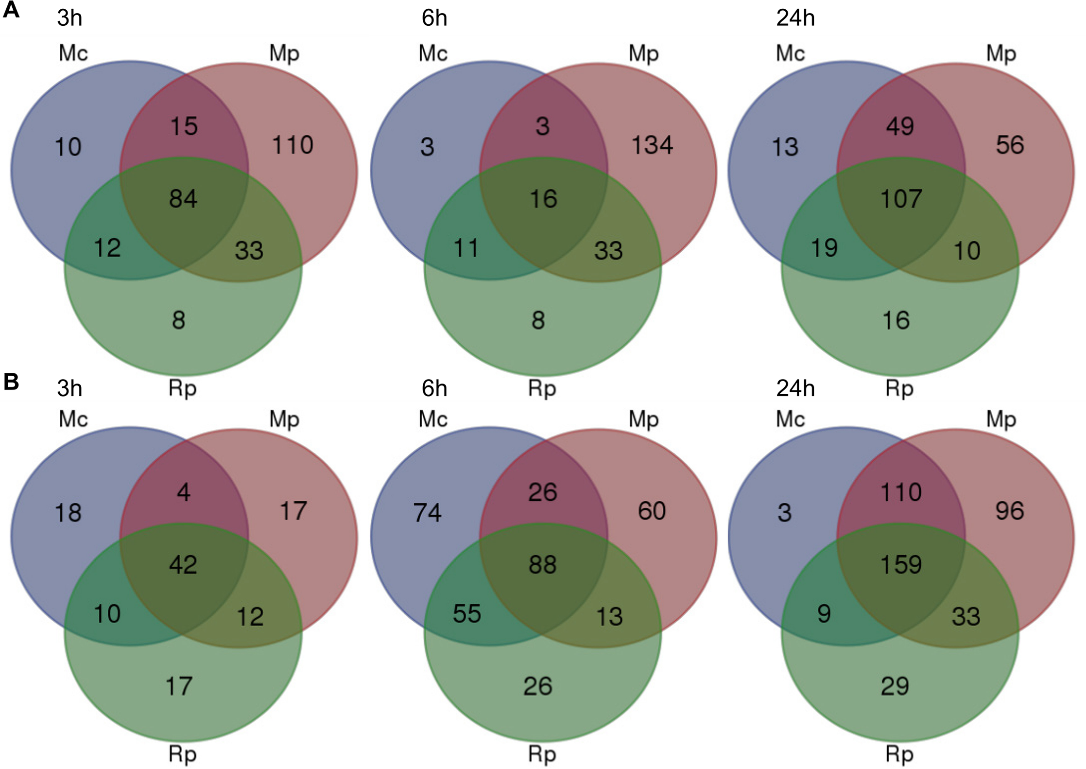 Overlap of <i>Arabidopsis</i> differentially expressed genes across different aphid interactions.