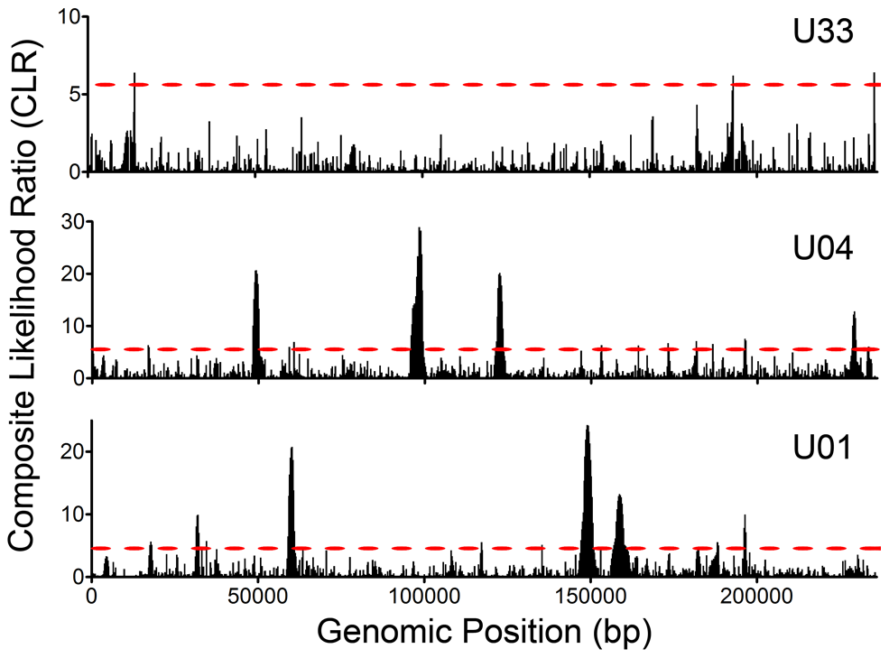 Selective Sweeps were detected within HCMV intrahost populations.