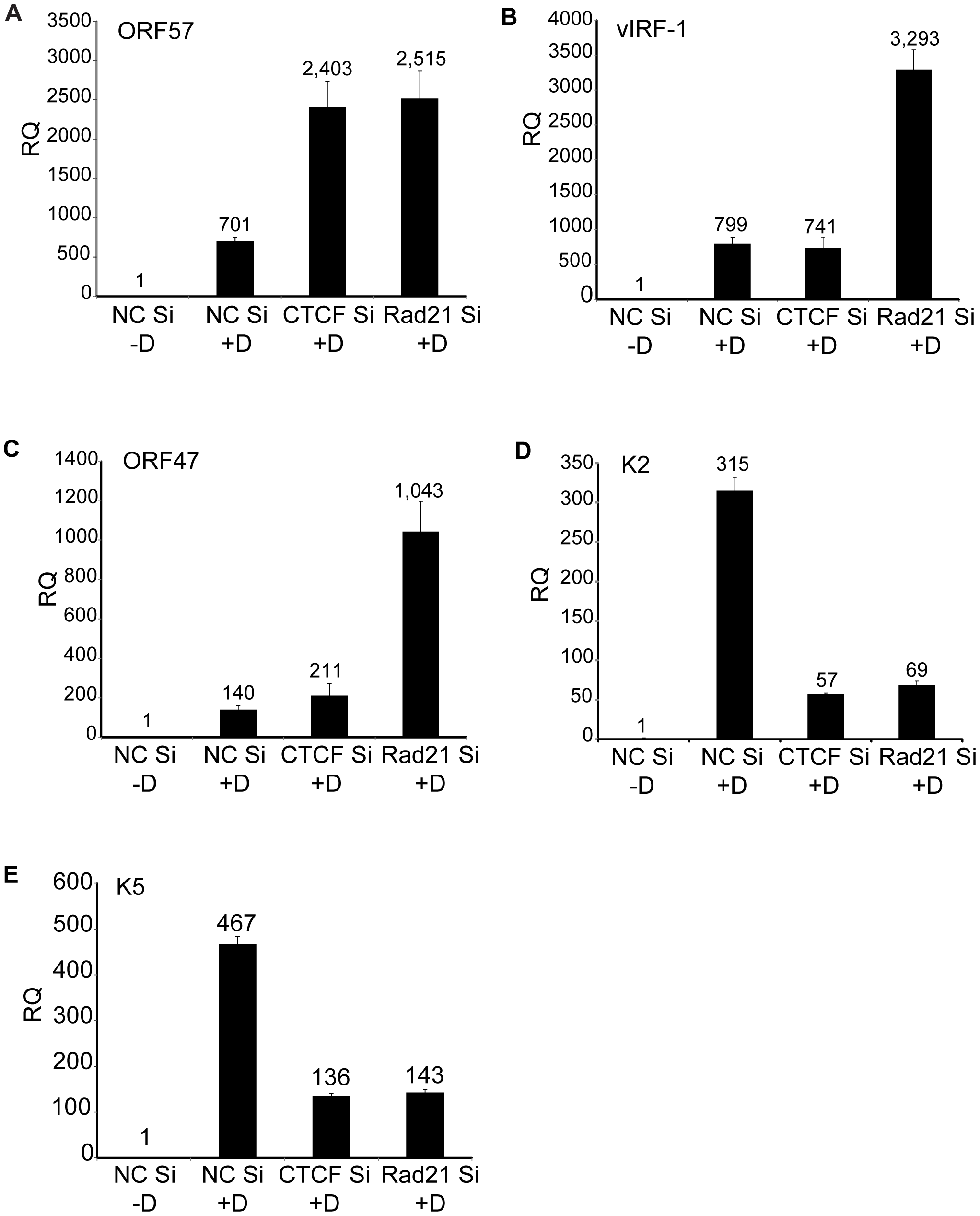 Effects of Rad21 or CTCF knockdown on expression of specific KSHV genes.
