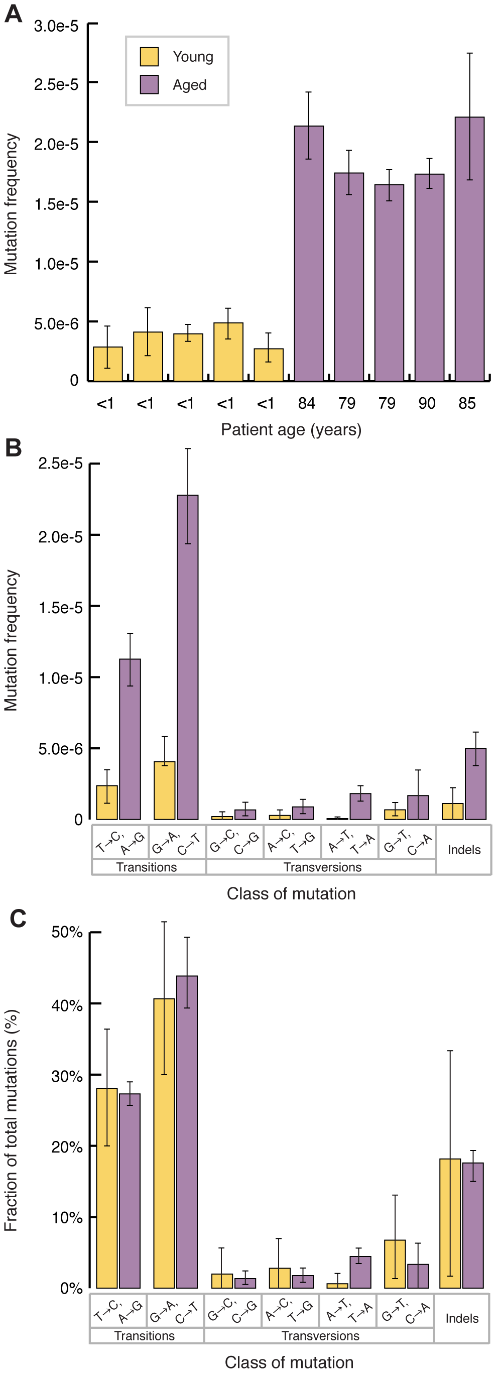 Mitochondrial point mutations increase with age and are biased to transitions.