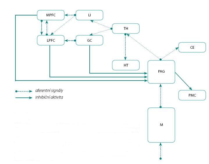 Obr. 2. Schéma centrální regulace během jímací fáze mikčního cyklu Fig. 2. Scheme of central regulation during storage phase of the micturition cyclus
