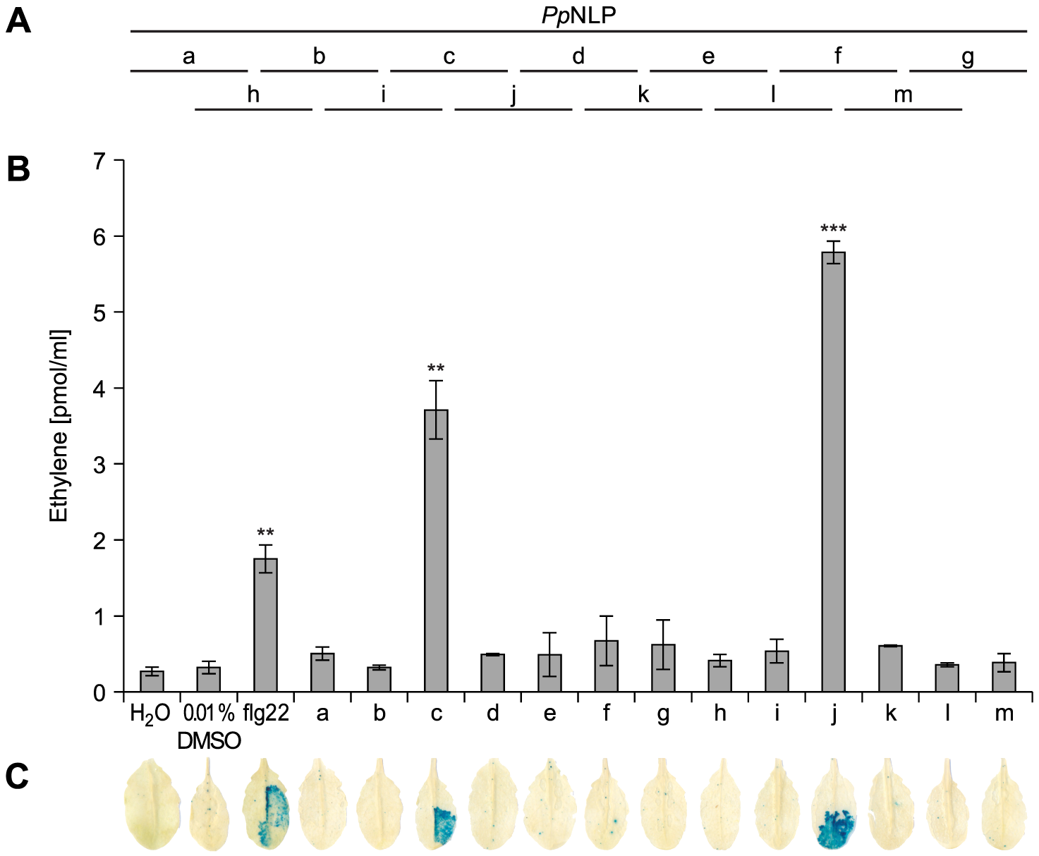 Immunogenic activities in <i>Arabidopsis</i> of synthetic <i>Pp</i>NLP sequence-derived peptides.