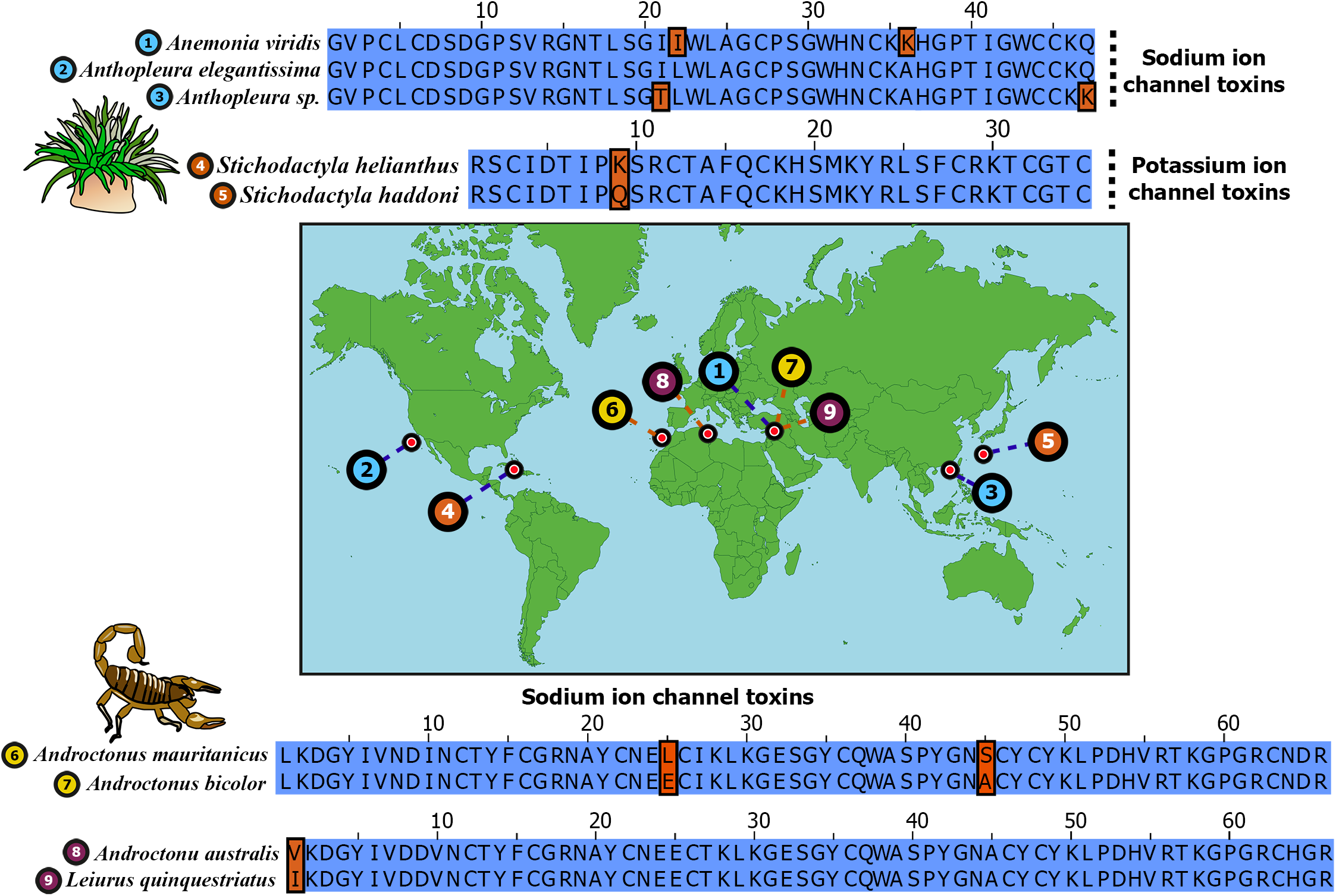 Remarkable sequence conservation in distantly related toxins.