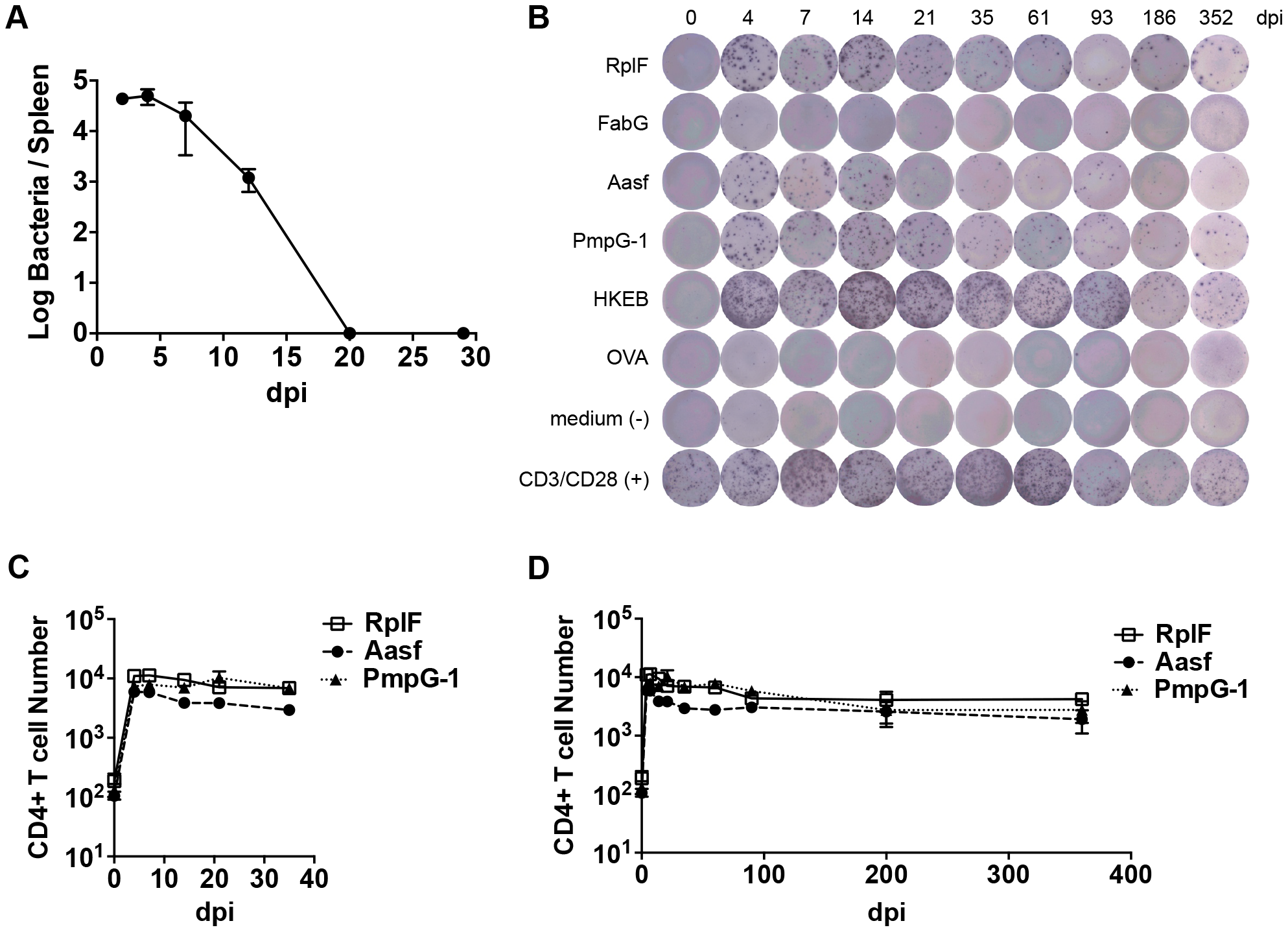 Kinetics of antigen-specific CD4<sup>+</sup> T cell expansion after <i>C. muridarum</i> intravenous (i.v.) infection.