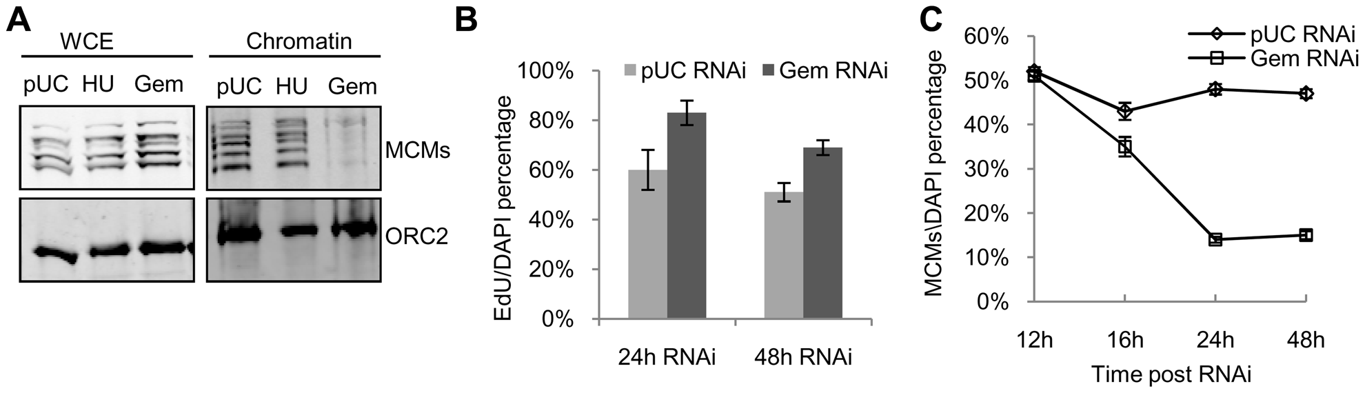 Limited pre-RC re-assembly occurs in the absence of geminin.