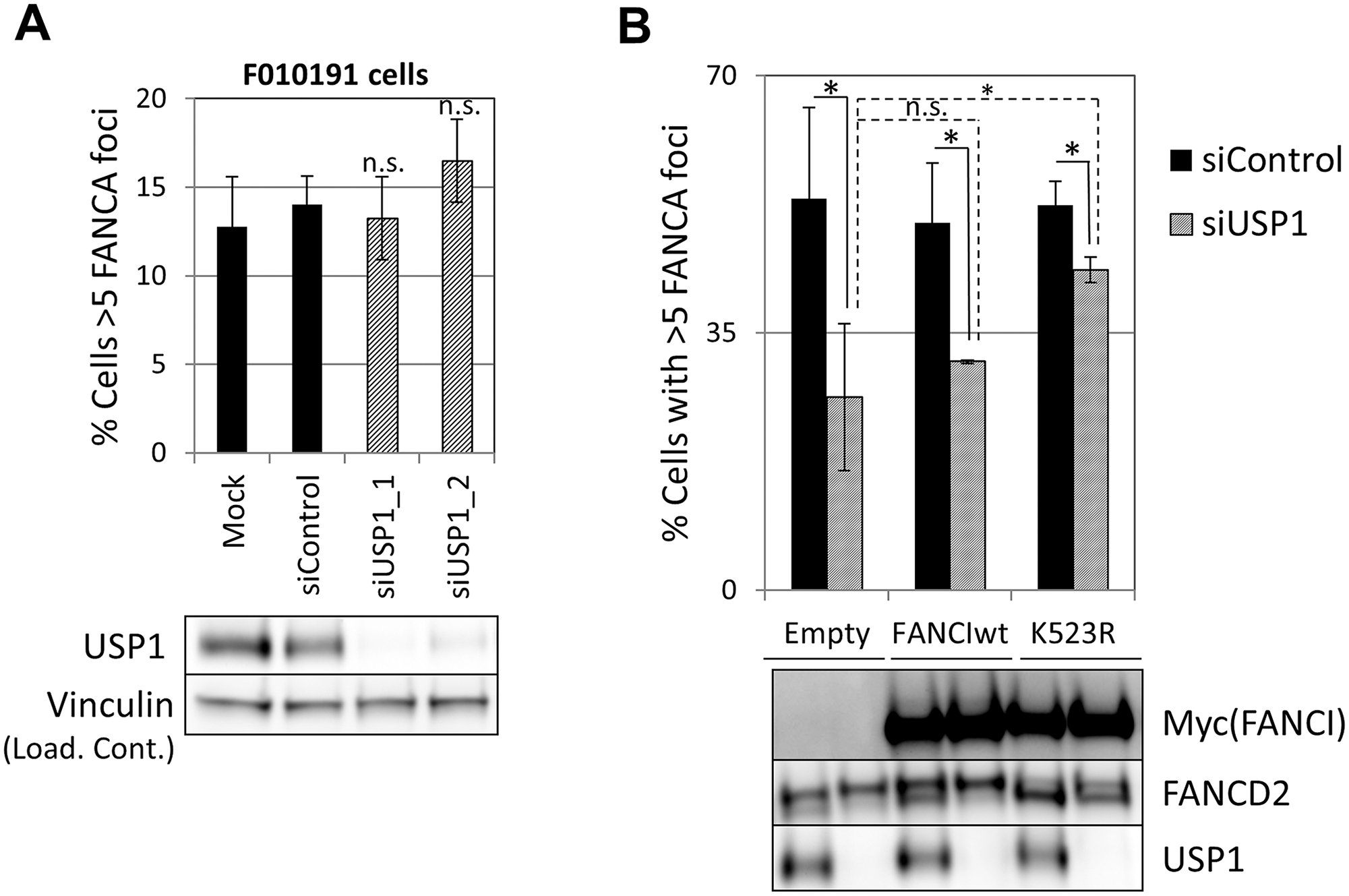 Deubiquitination of FANCI by USP1 is required for FA core complex foci formation.