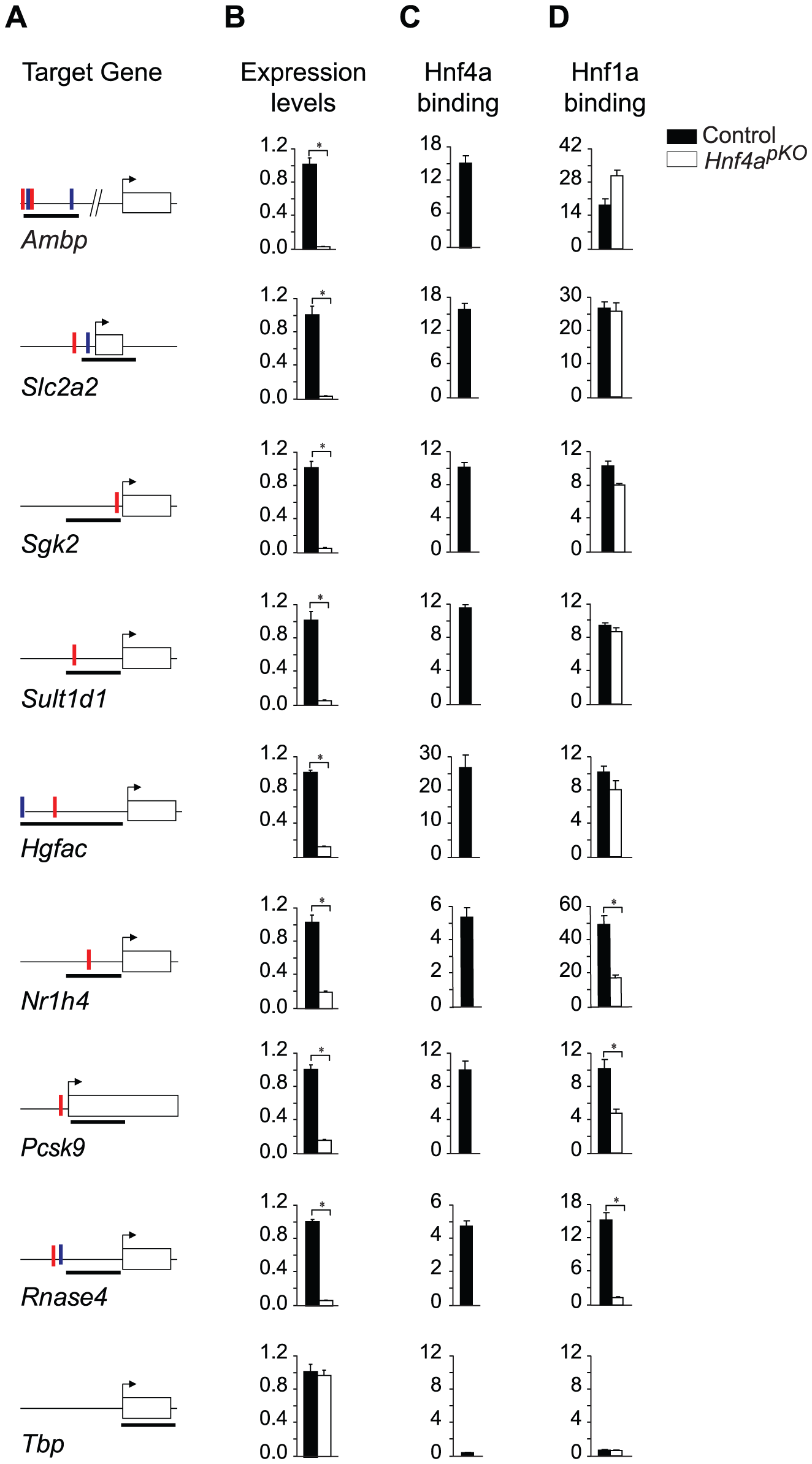 Gene-specific mechanisms for functional synergism.