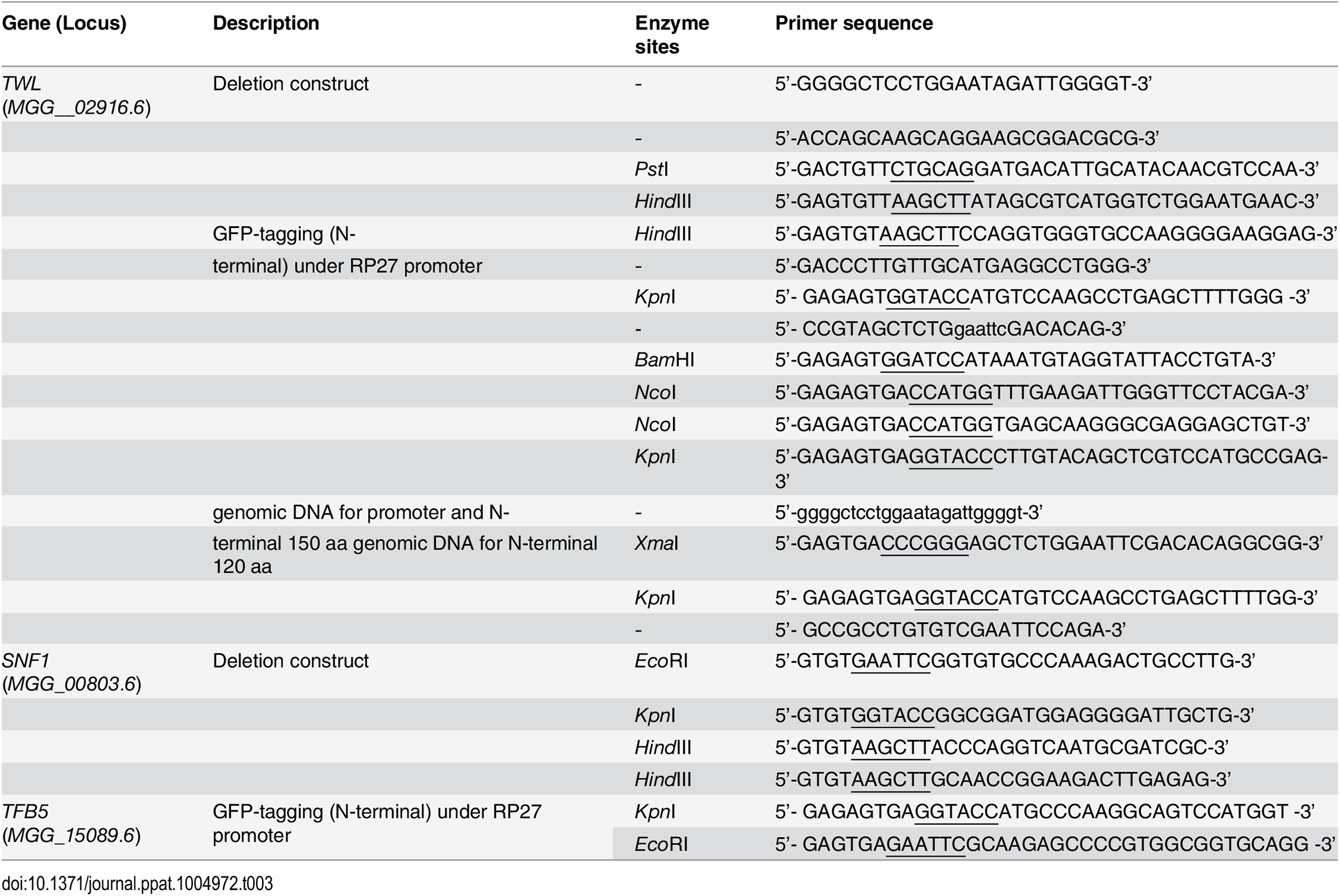 Oligonucleotide primers used for plasmid construction in this study.