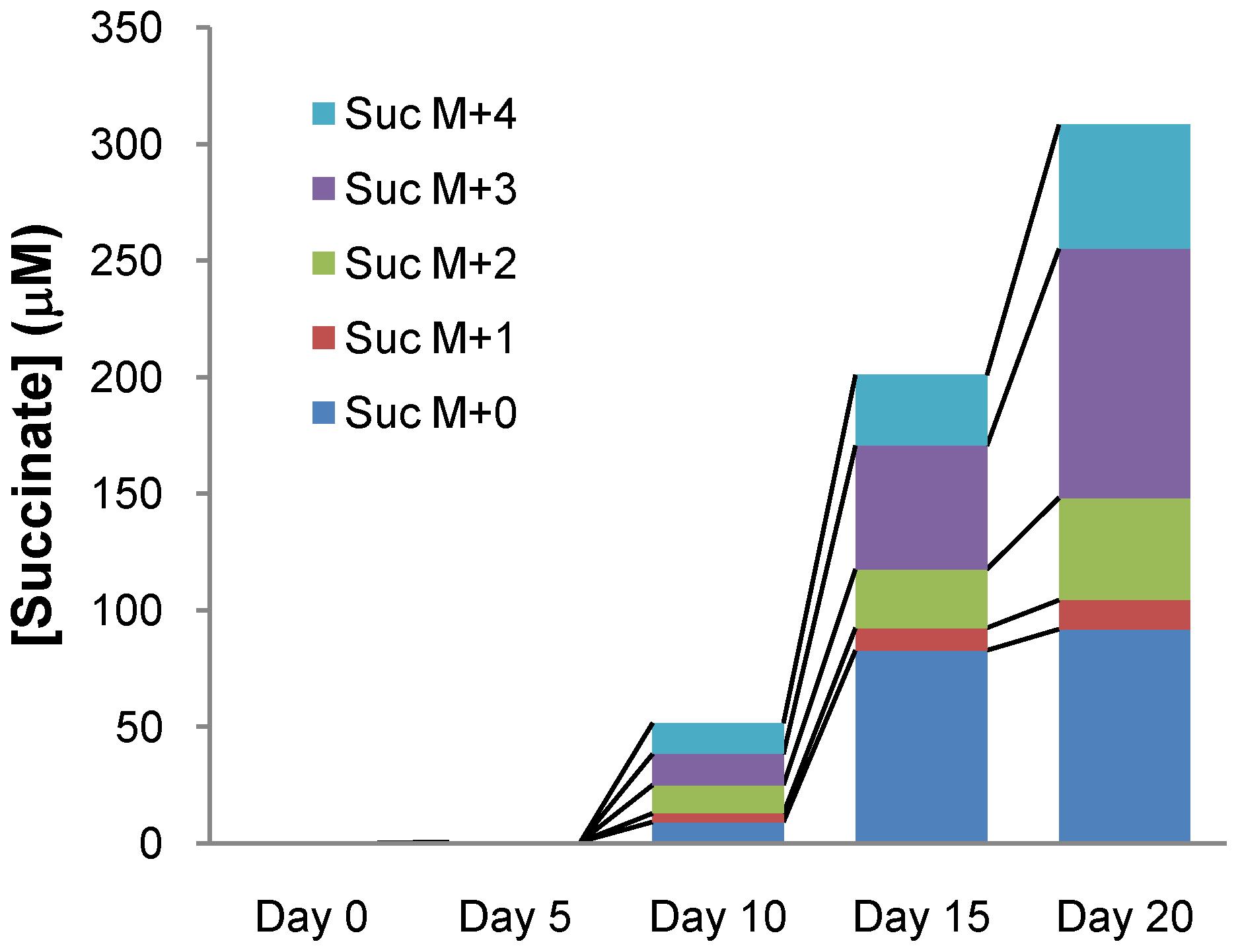 Isotopic succinate accumulation in supernatant of NRP culture in 0.75% U-<sup>13</sup>C Glucose Dubos medium.