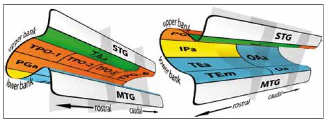 Schéma anatomické parcelace STS, jak ji navrhli Seltzer a Pandya [1].