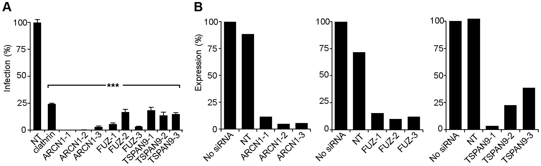 Silencing of ARCN1, FUZ, and TSPAN9 in human U-2 OS cells inhibits alphavirus infection.