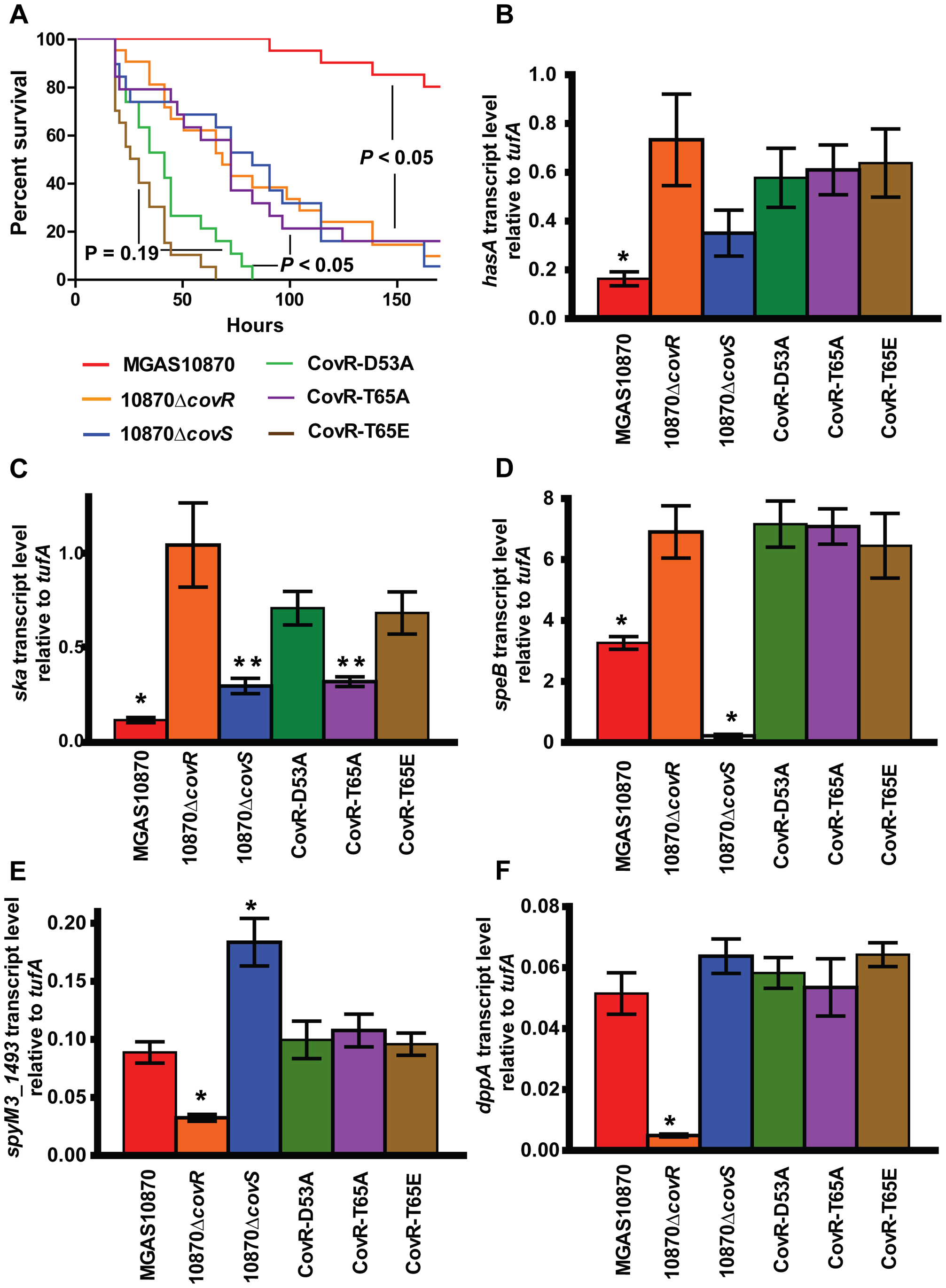 CovR phosphorylation affects GAS virulence and gene expression during infection.