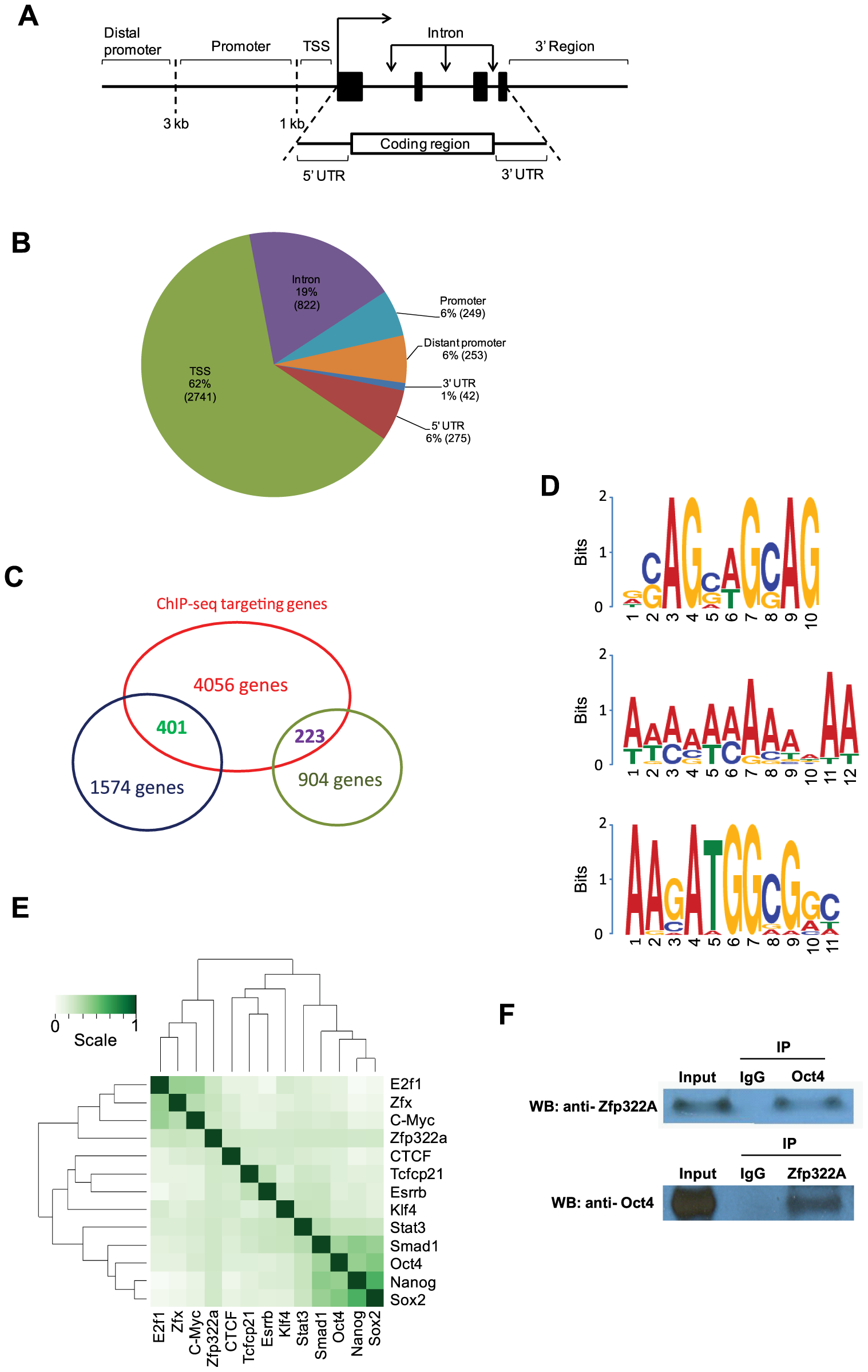Genomic-wide analysis of Zfp322a binding sites.