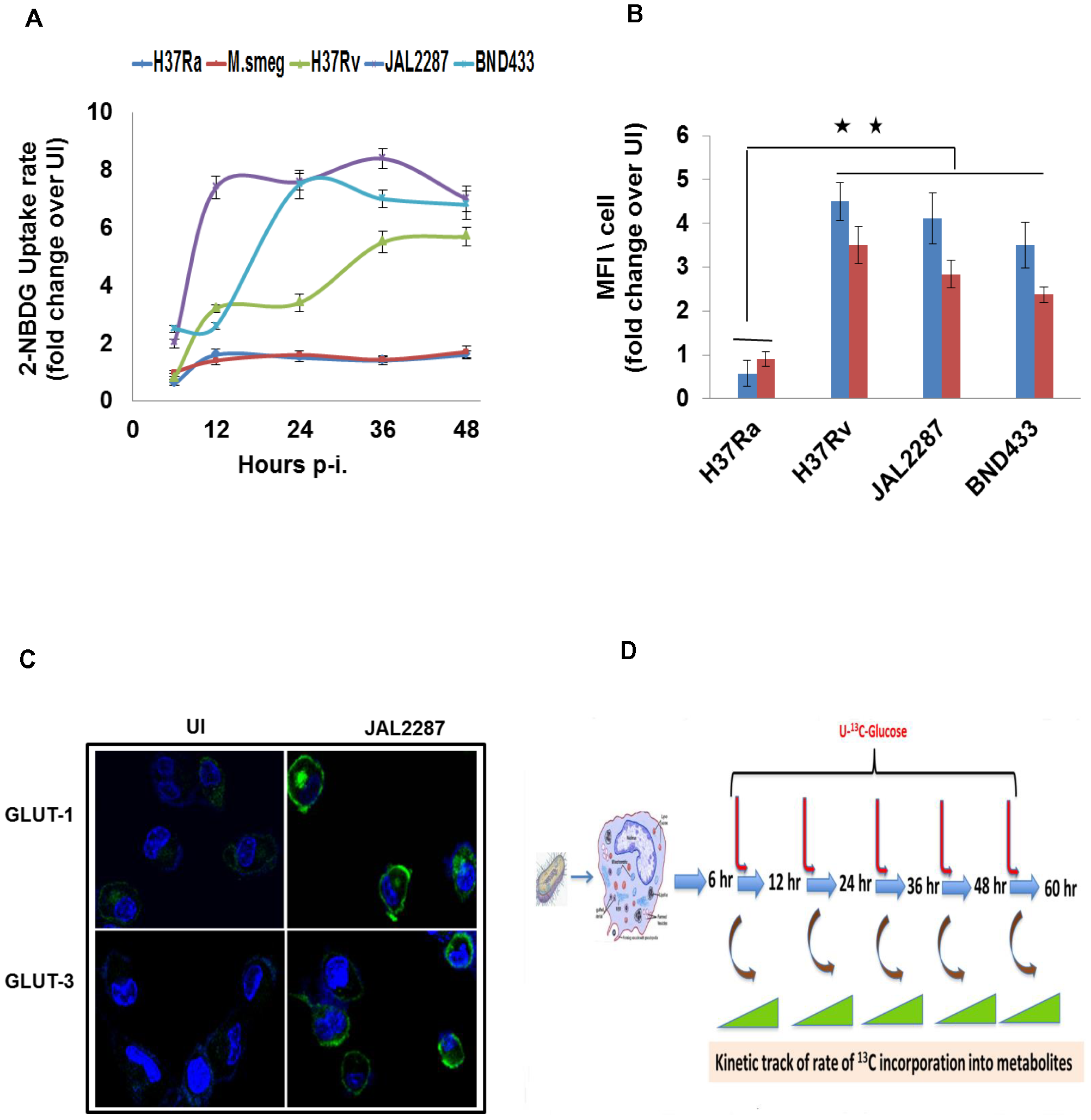 Potentiation of host cellular glucose uptake by Mtb infection.