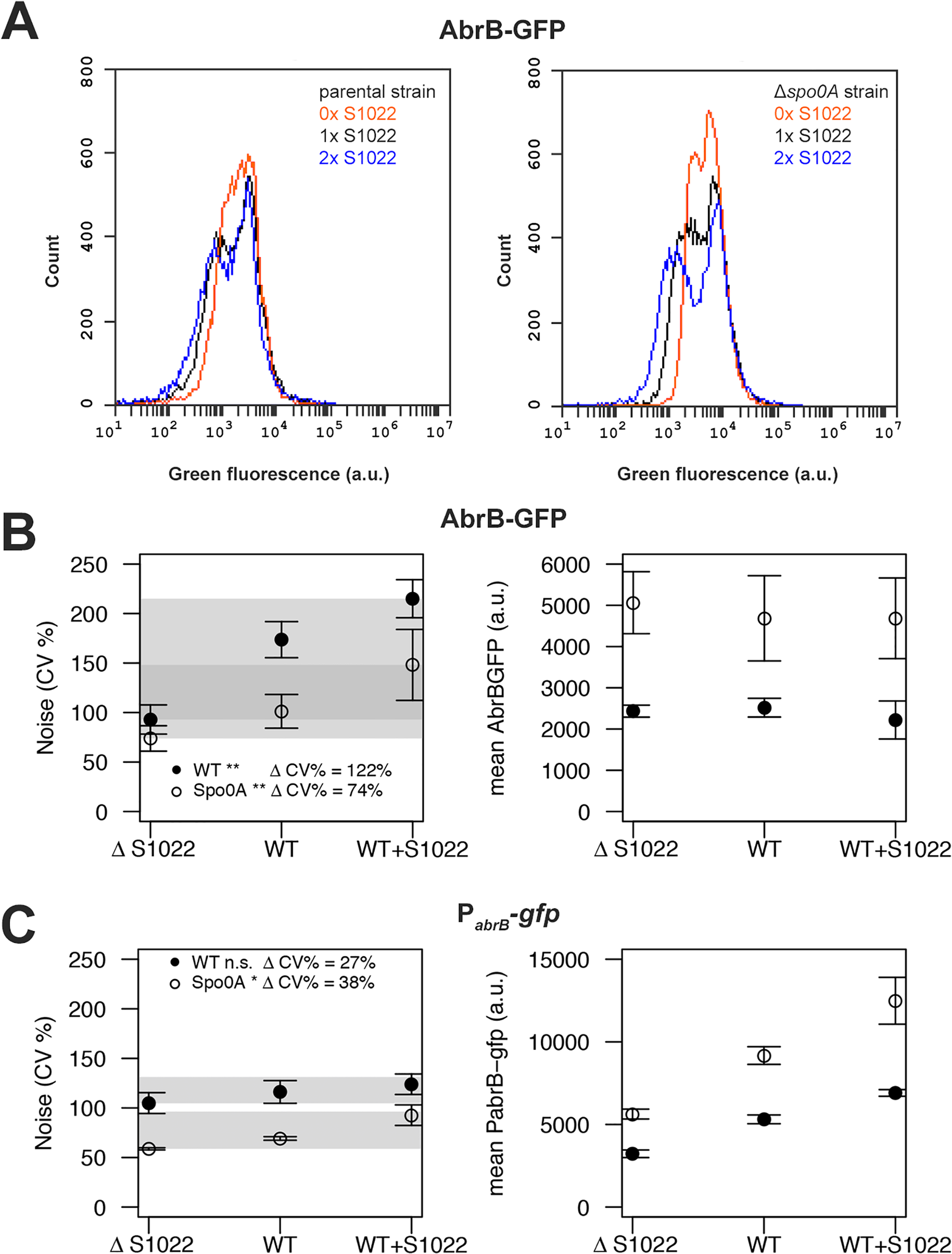 RnaC/S1022 induces protein expression noise of AbrB-GFP.