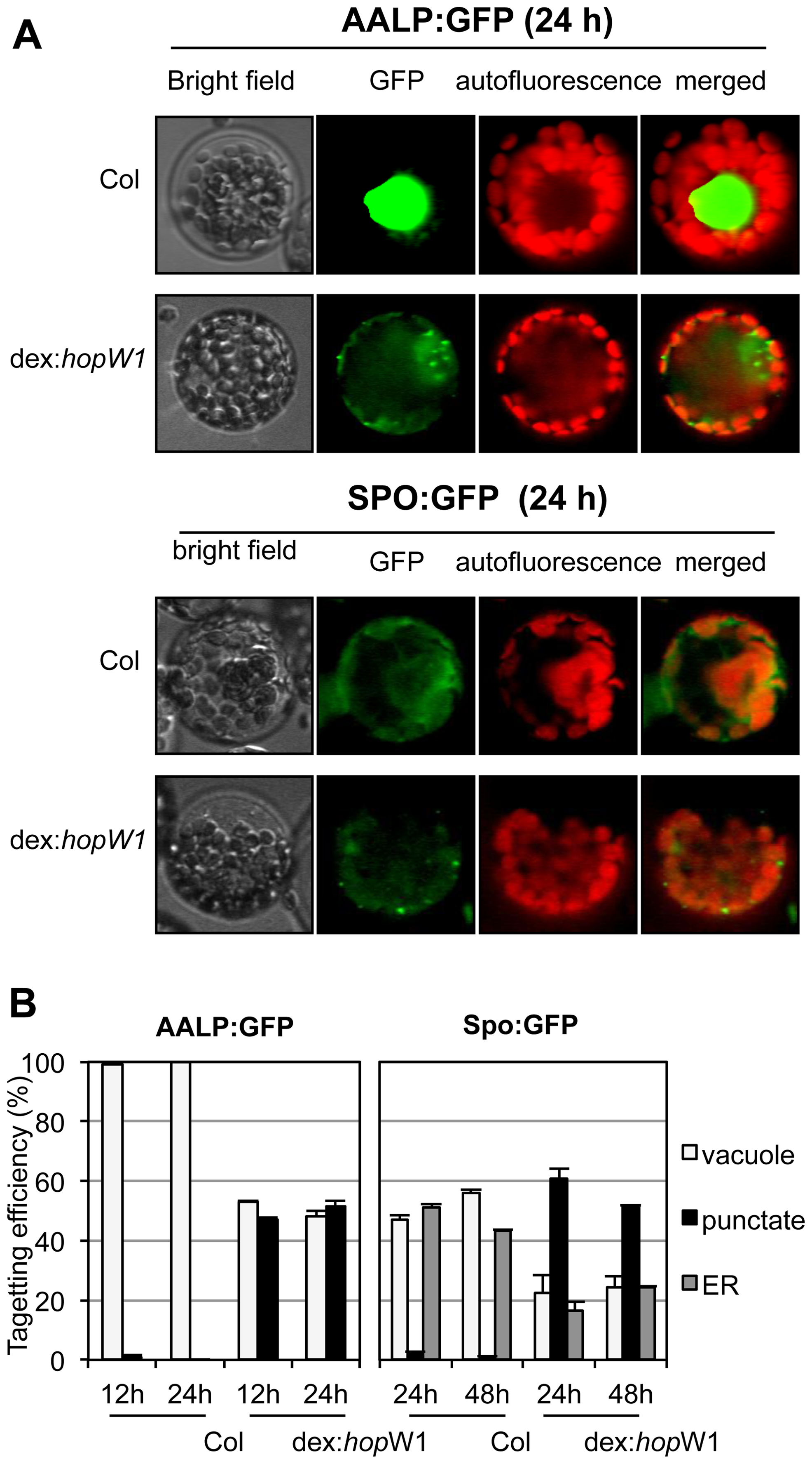 Inhibition of the vacuolar and ER trafficking by HopW1.