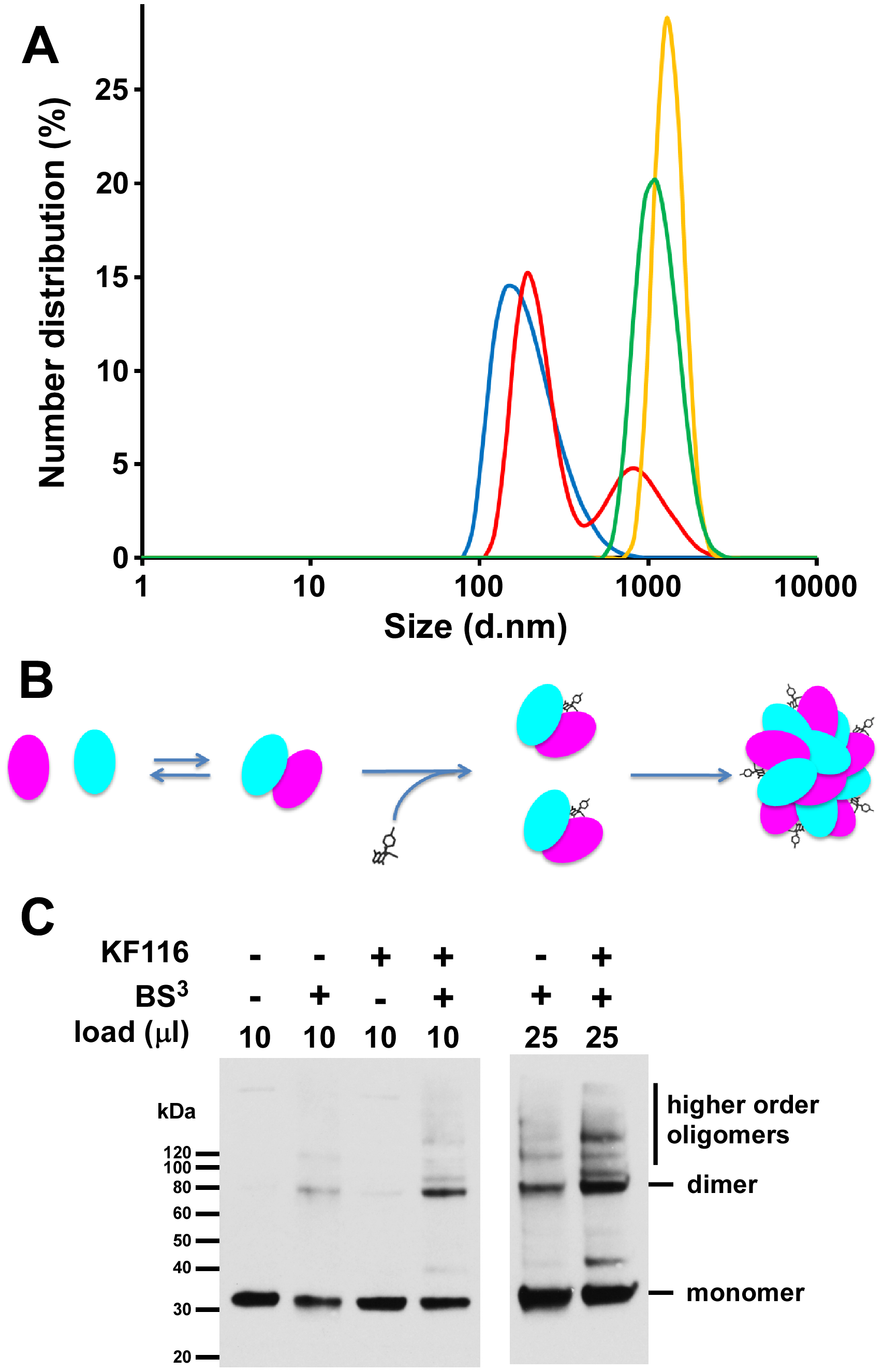 KF116 promotes IN multimerization <i>in vitro</i> and in HIV-1 particles.
