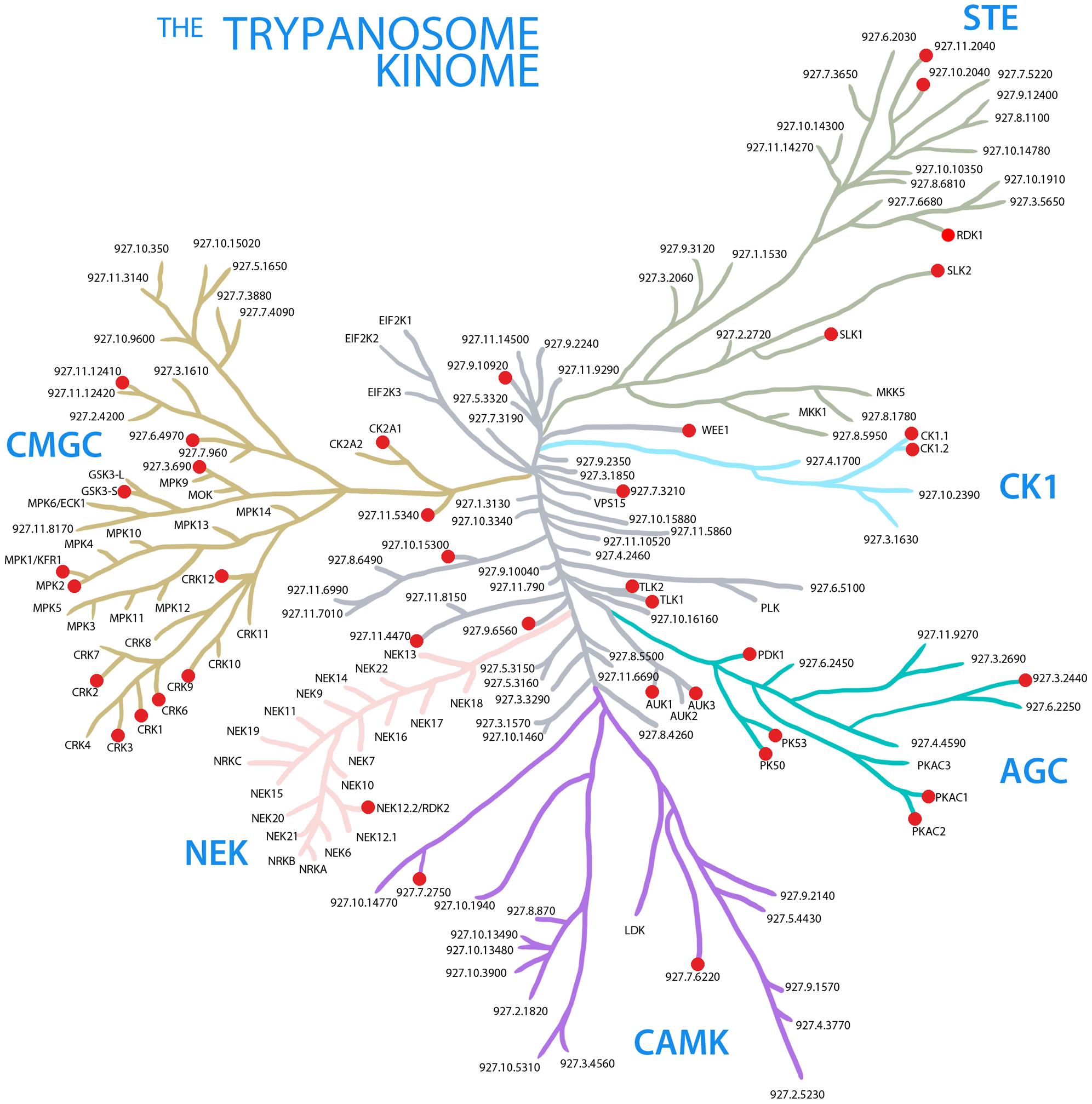 The trypanosome kinome.