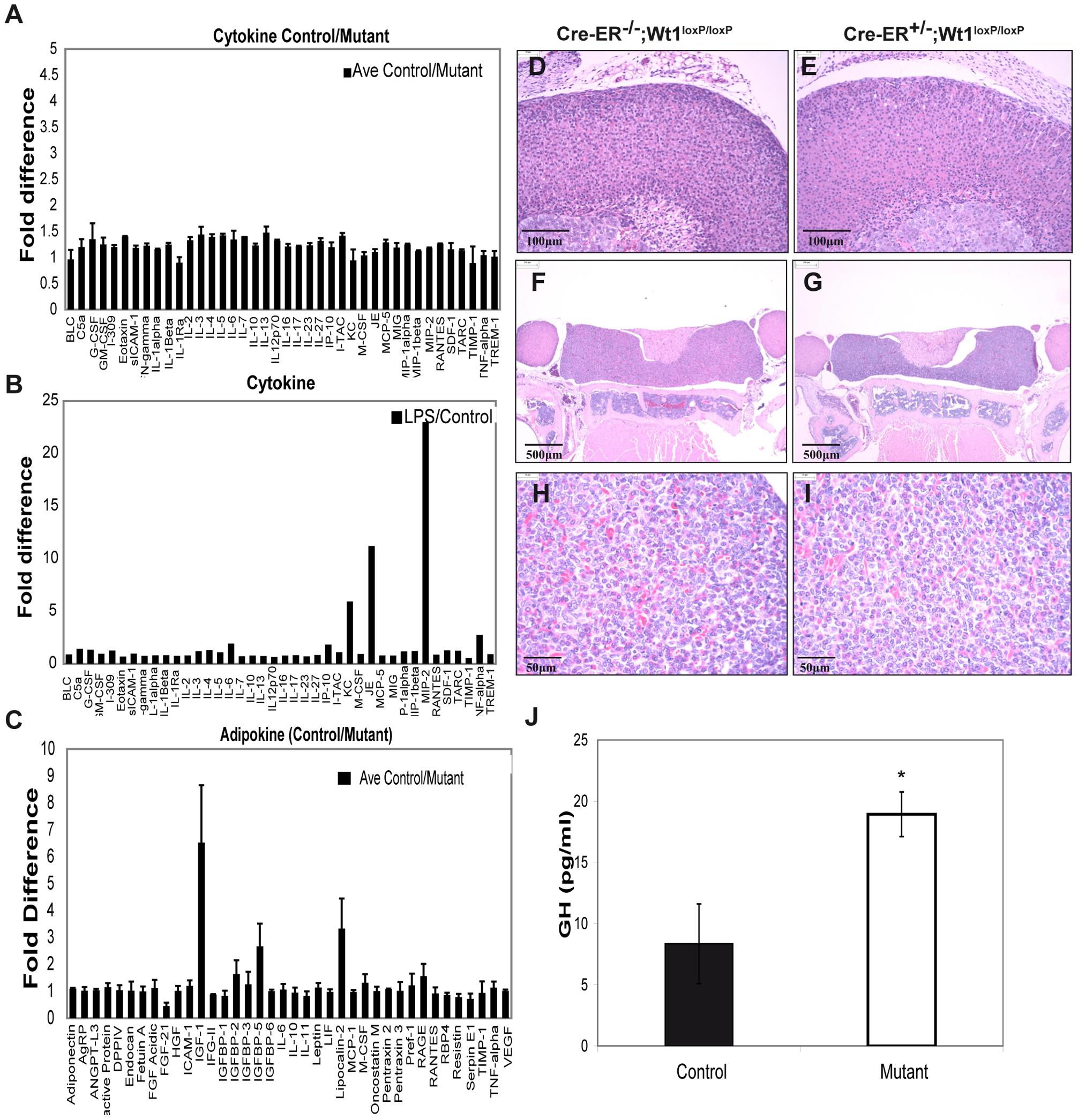 Cytokine, adipokine, and growth hormone analysis in control and mutant plasma.