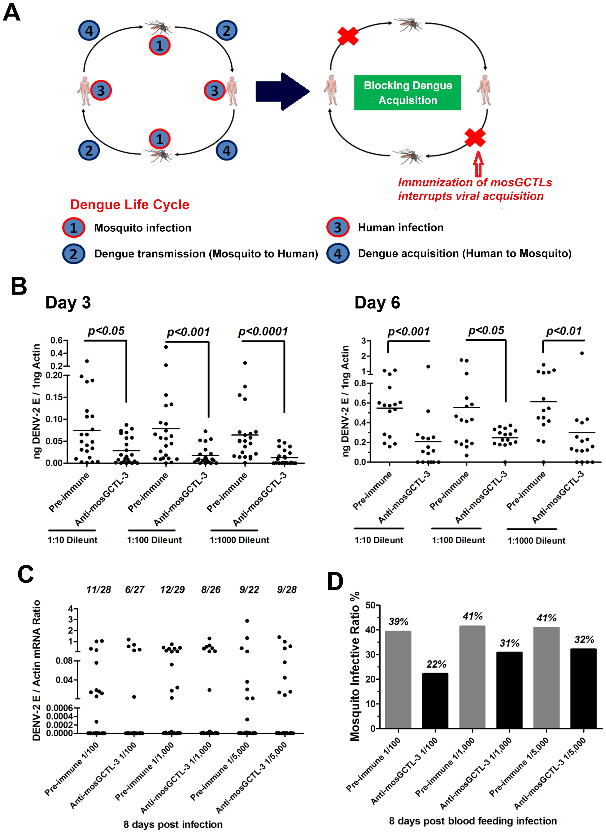 mosGCTL-3 antisera interrupted DENV-2 infection of <i>A. aegypti</i>.