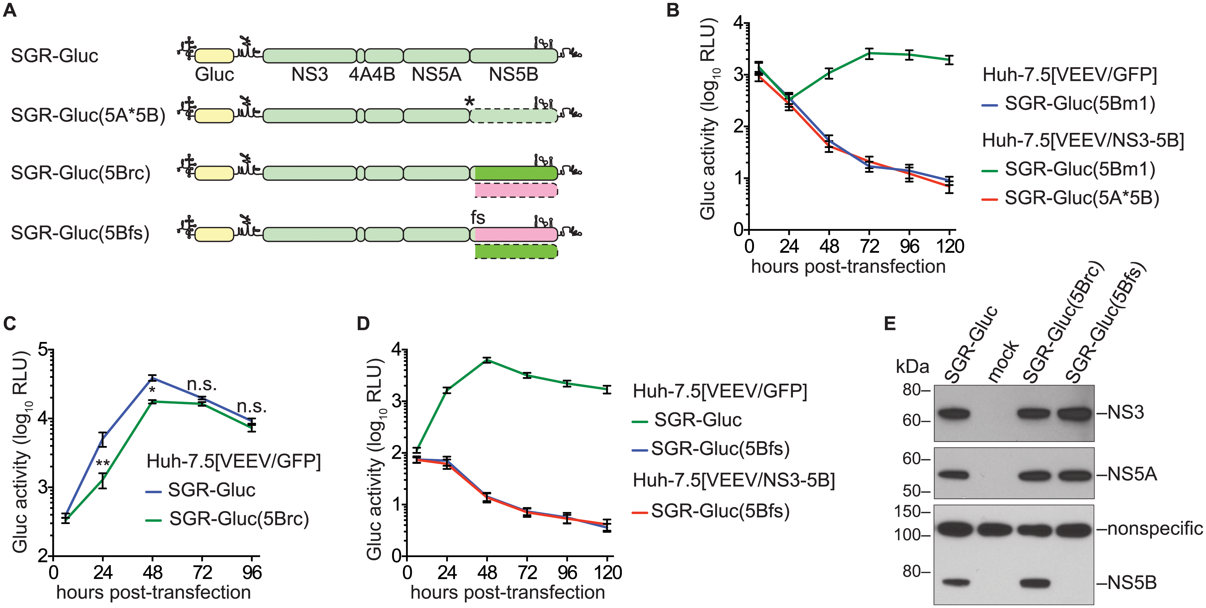 NS5B protein is required in <i>cis</i>.