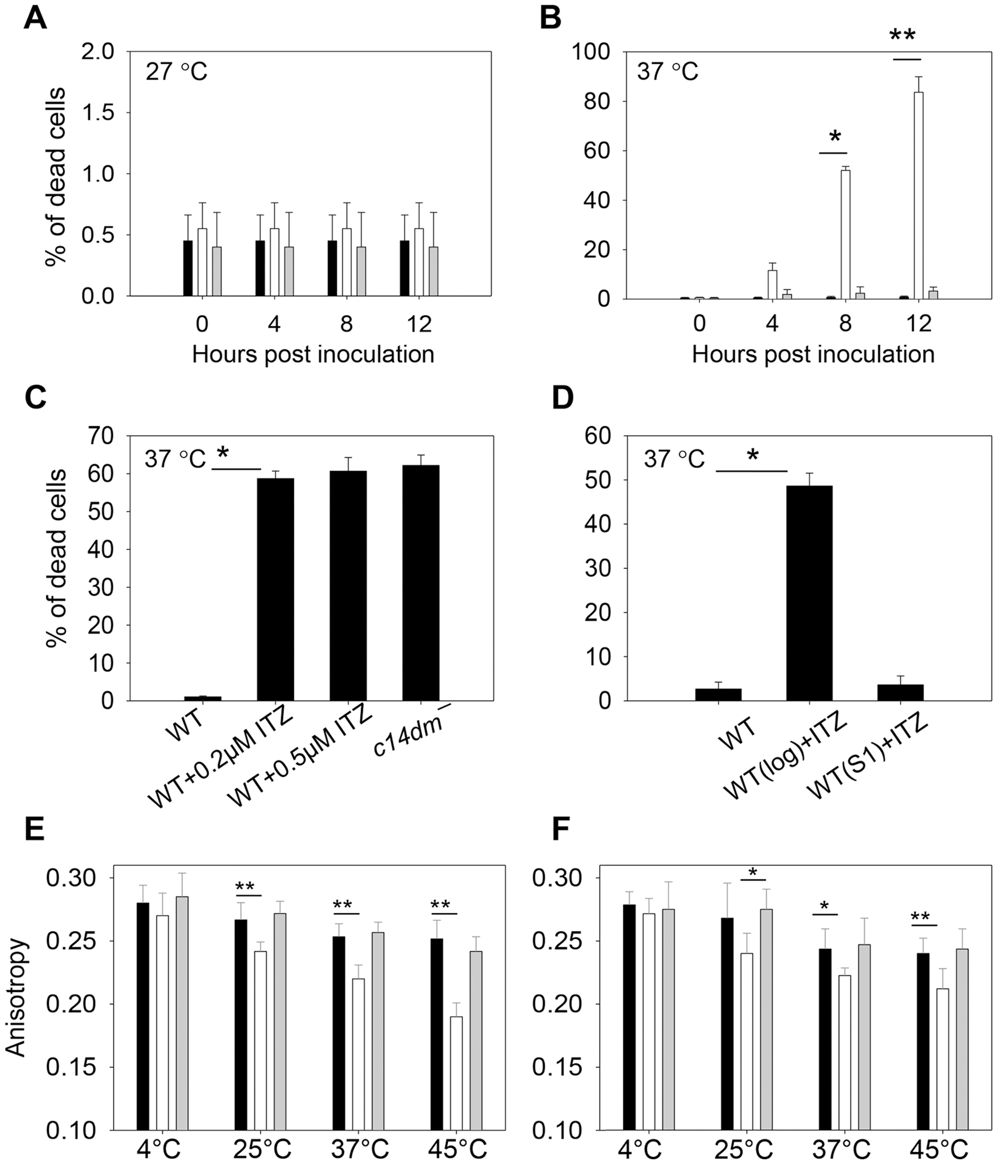 Inactivation of C14DM leads to extreme sensitivity to heat and increased membrane fluidity.
