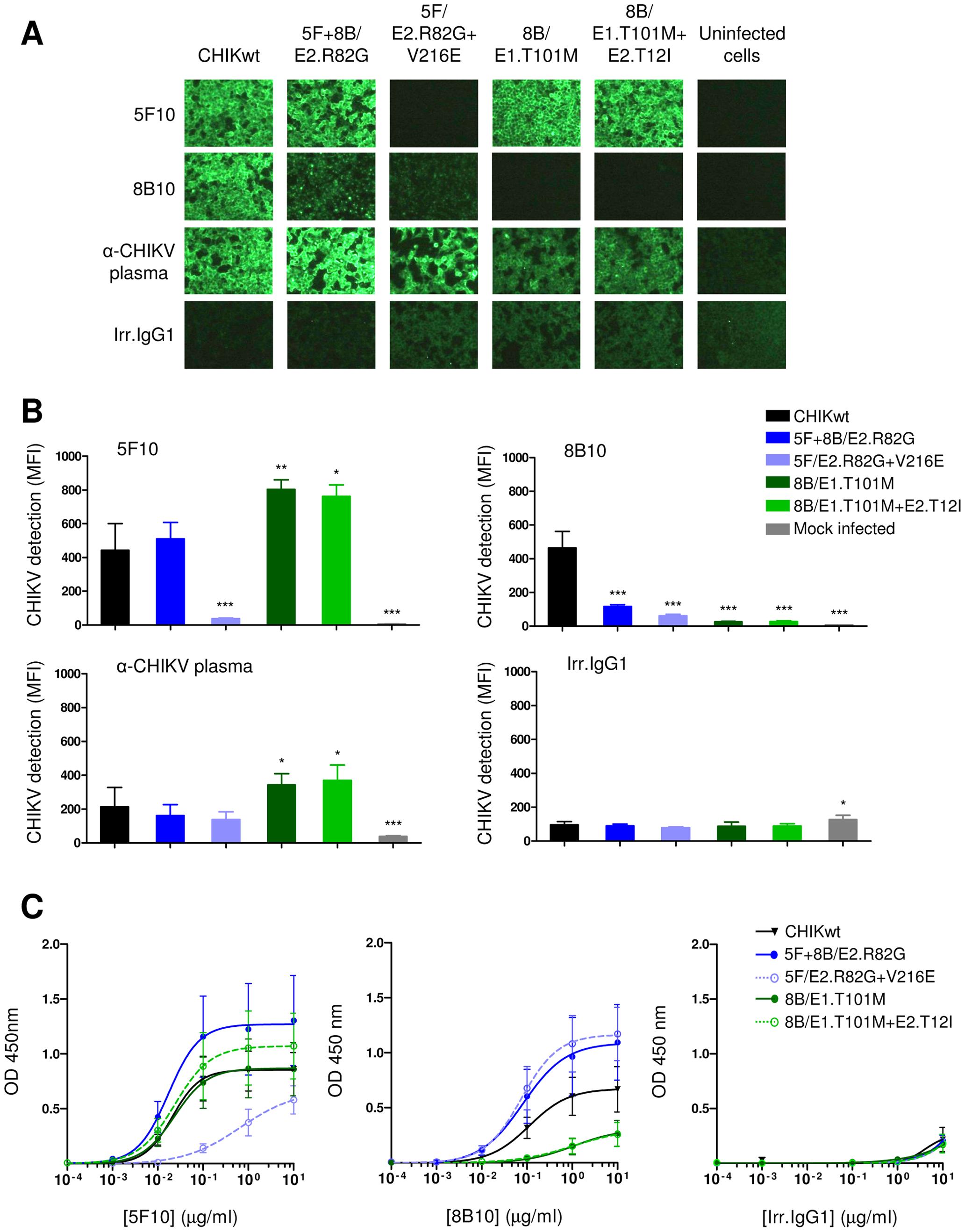 Analysis of 5F10 and 8B10 mAb binding to clonal CHIKVs.