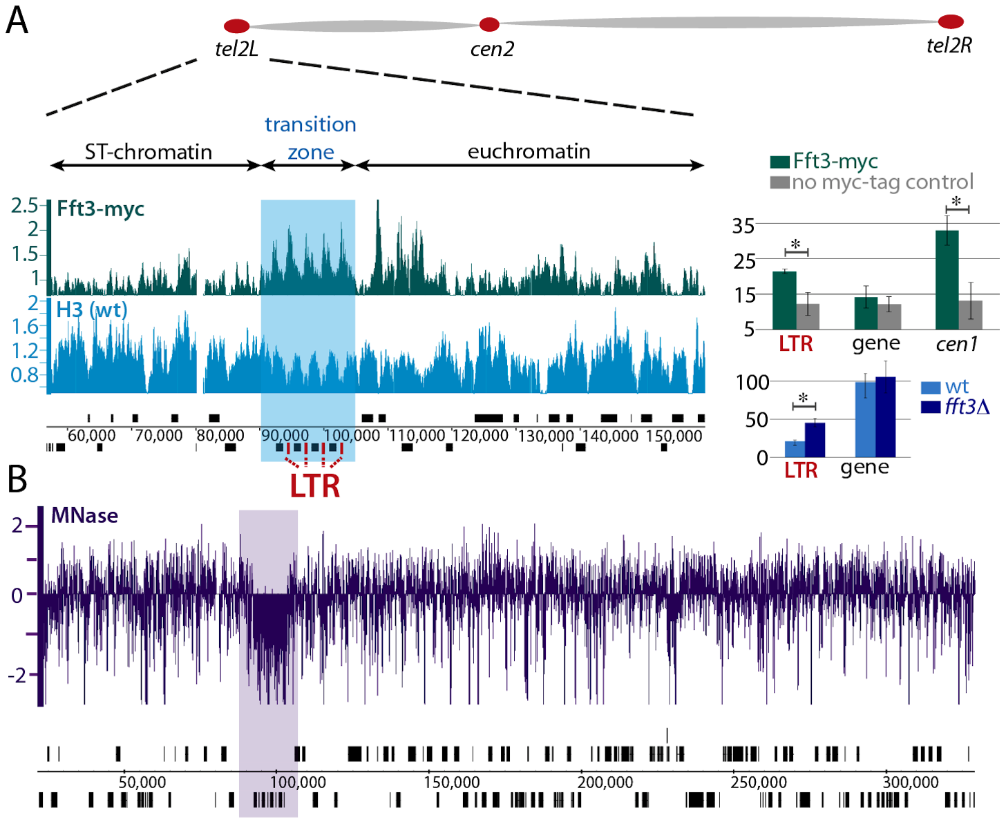 Fft3 is localized to the <i>tel2L</i> subtelomeric transition zone.