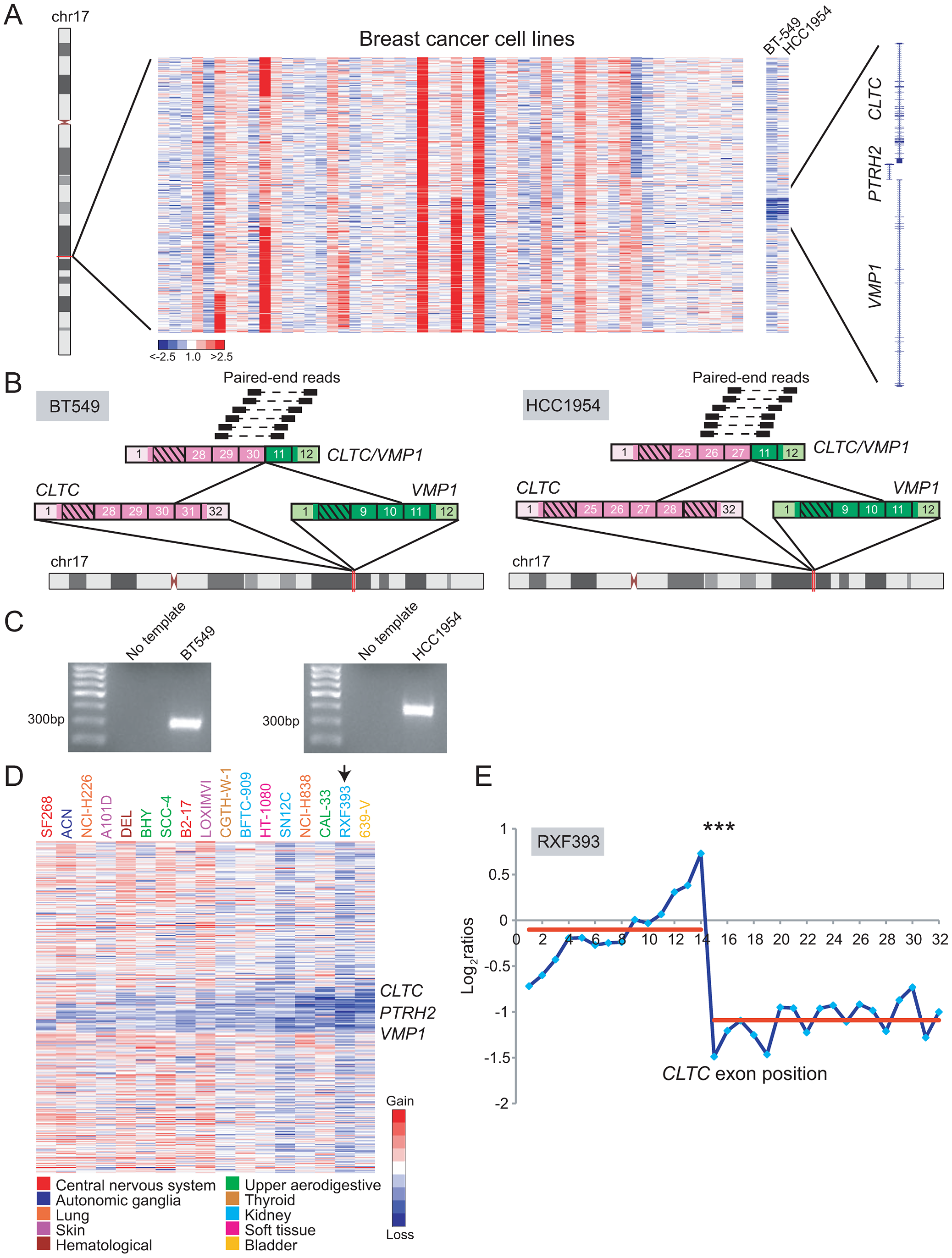 DBA discovery of recurrent rearrangements of <i>CLTC</i> and <i>VMP1</i> across diverse cancer types.