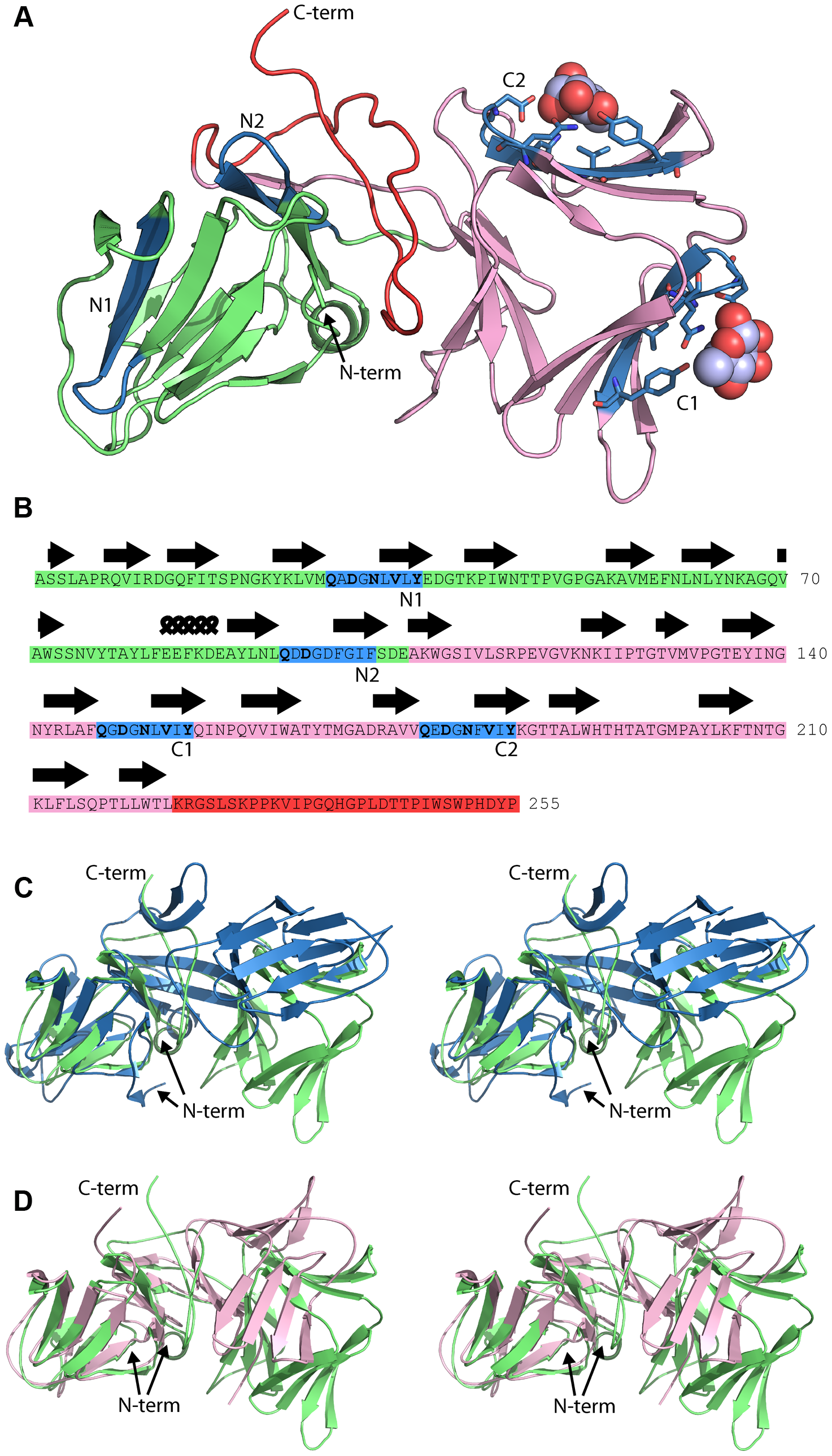 Crystal structure of pyocin L1 reveals tandem MMBL domains and sugar-binding motifs.