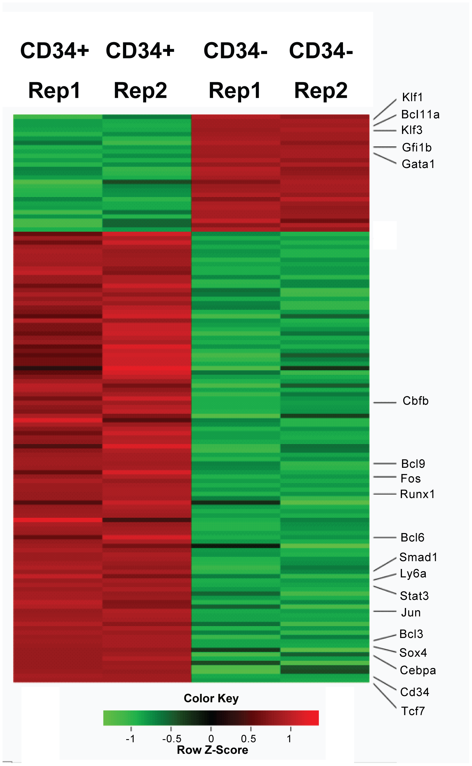 Heatmap display of transcription factors that differential expressed (>1.5 fold) between Lin-CD34+ cell and Lin-CD34− cells.