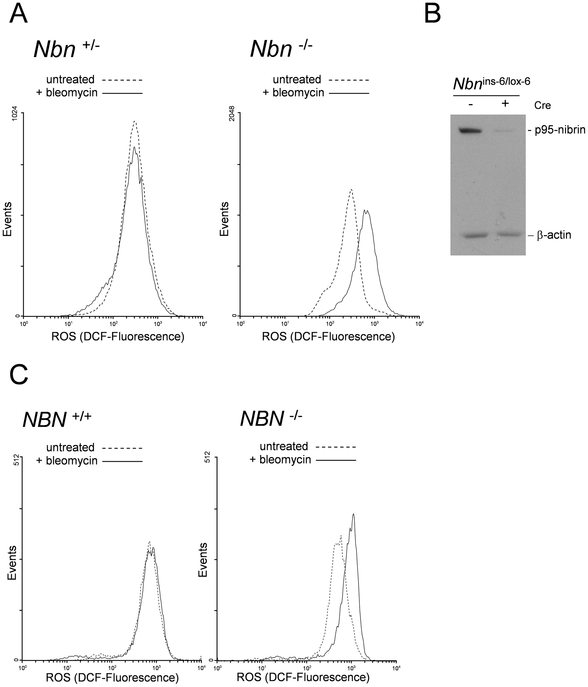 High levels of ROS in <i>Nbn</i> null mutant murine fibroblasts and NBS patient cells after DNA damage.