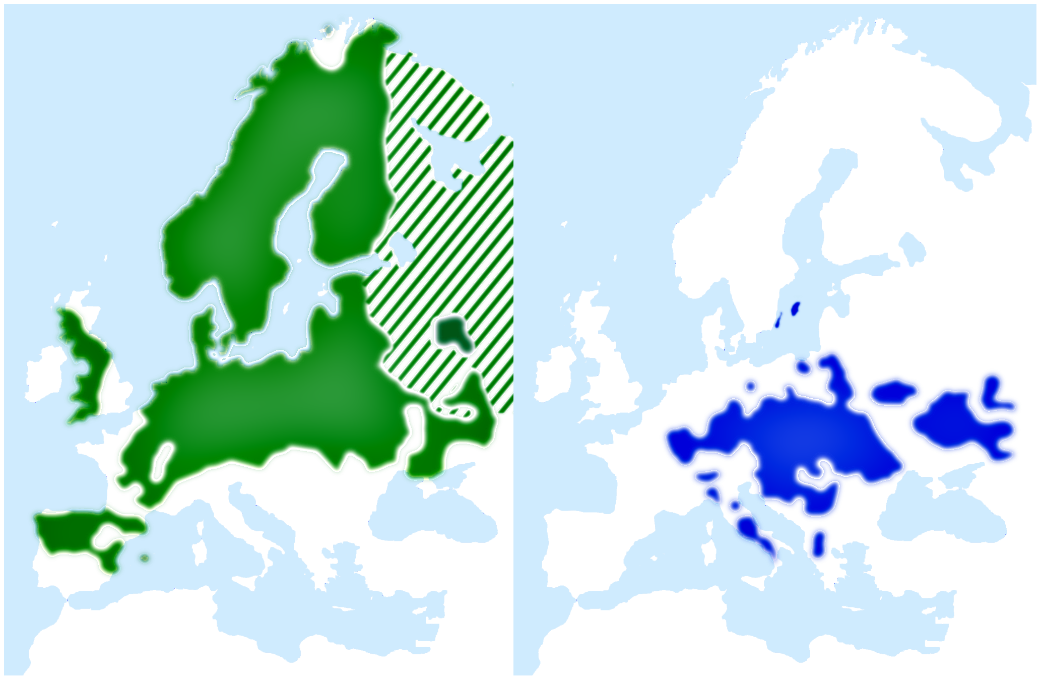 Breeding range distributions of pied flycatcher (green) and collared flycatcher (blue).