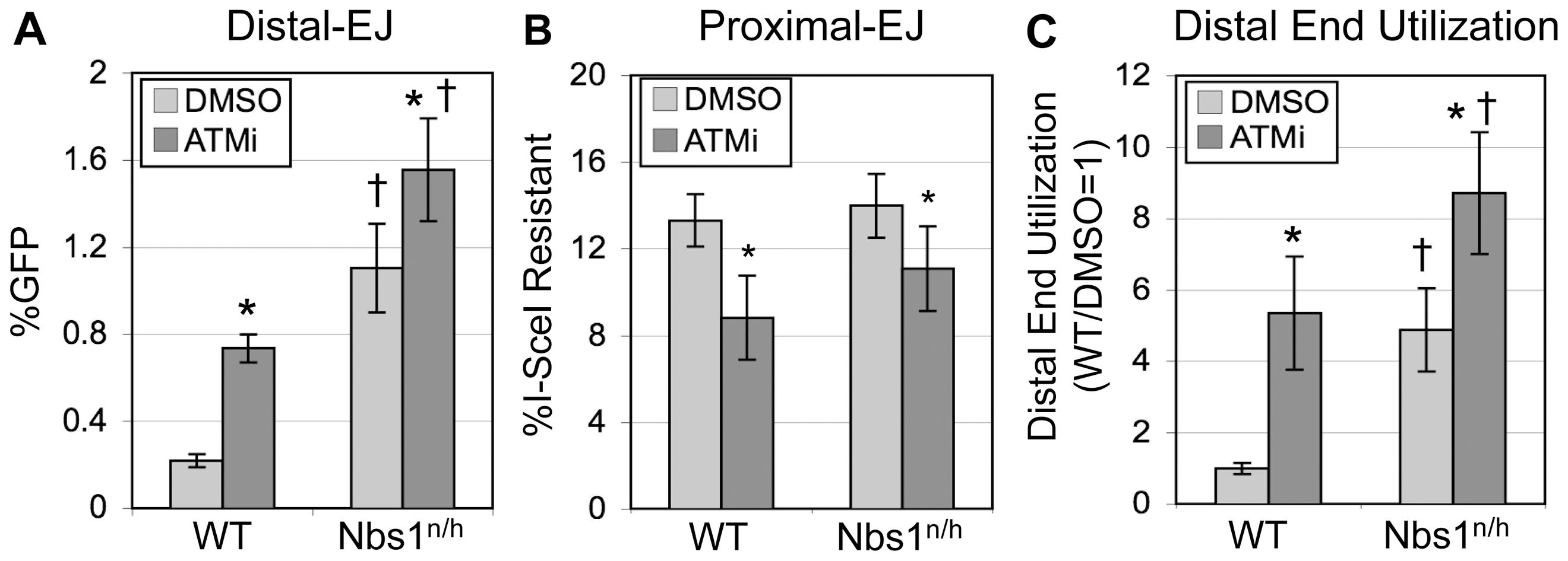 Nbs1 suppresses Distal-EJ to a similar degree as ATM.