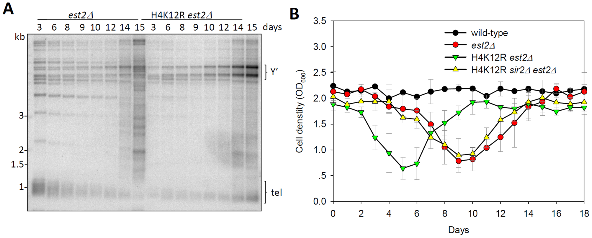 Histone H4K12 acetylation regulates telomere recombination.