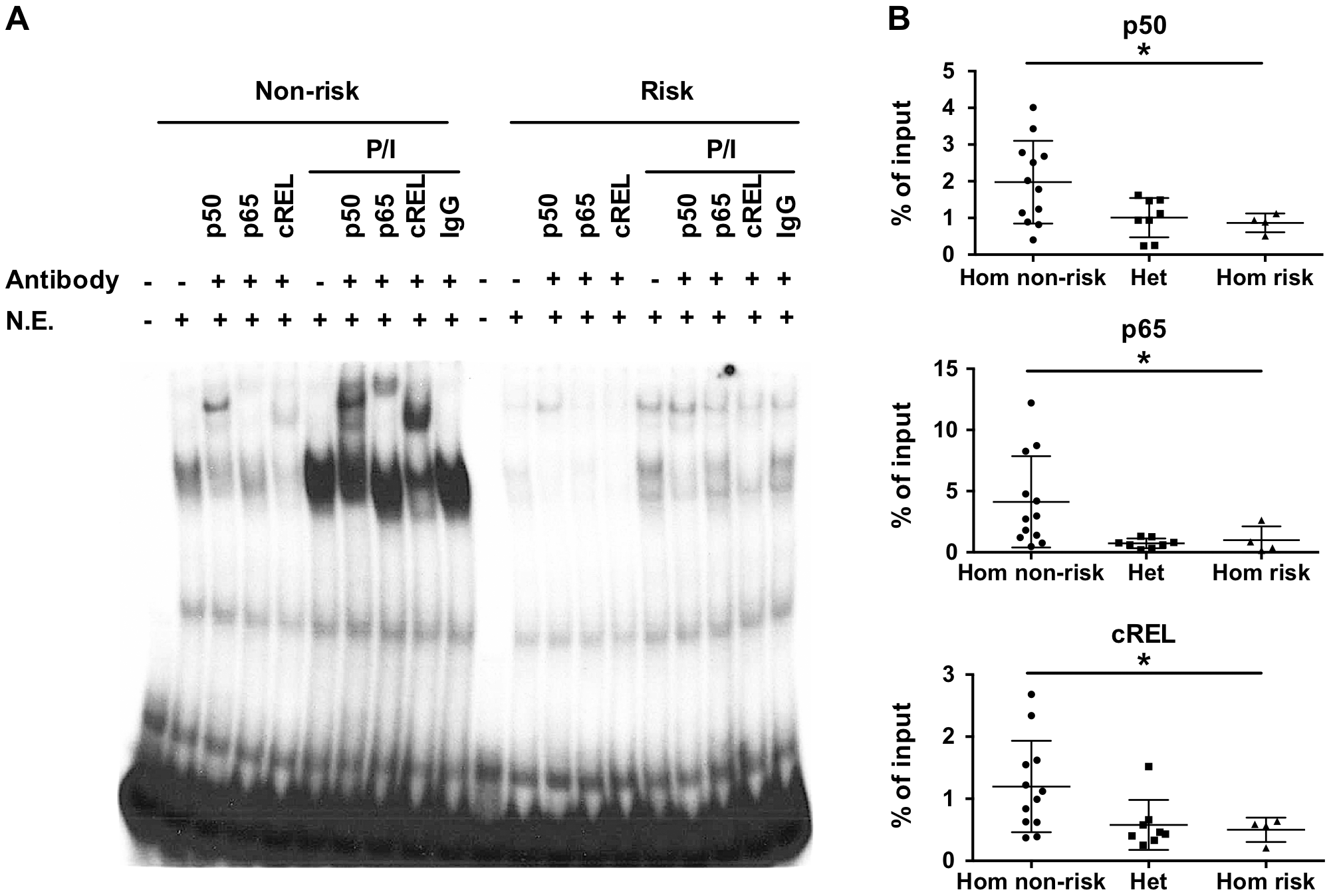 The TT>A variants result in reduced binding of a nuclear protein complex that contains NF-κB subunits.