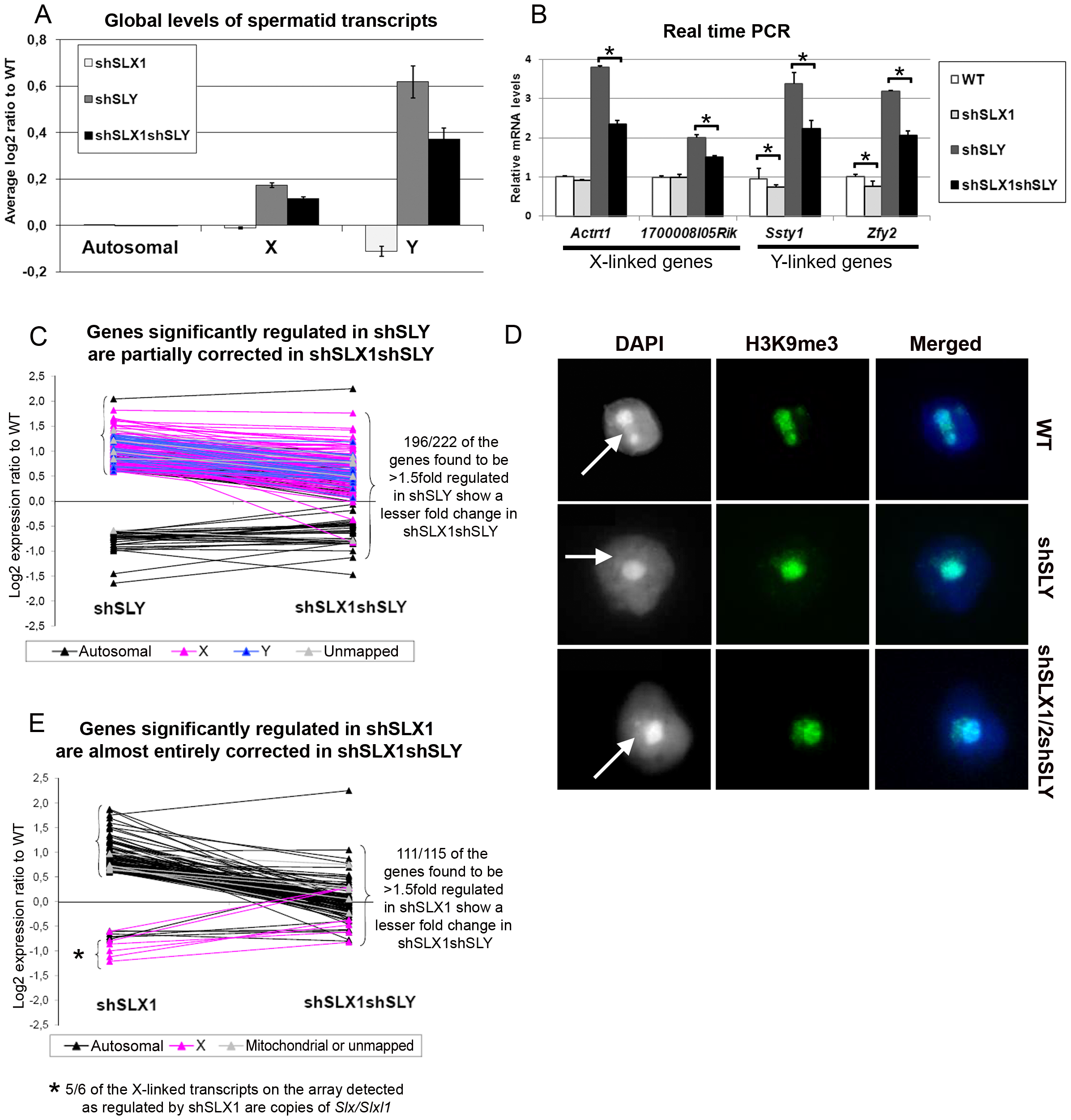 SLX/SLXL1 and SLY have opposite effects on gene expression and on the recruitment/maintenance of H3K9me3 on the sex chromatin.