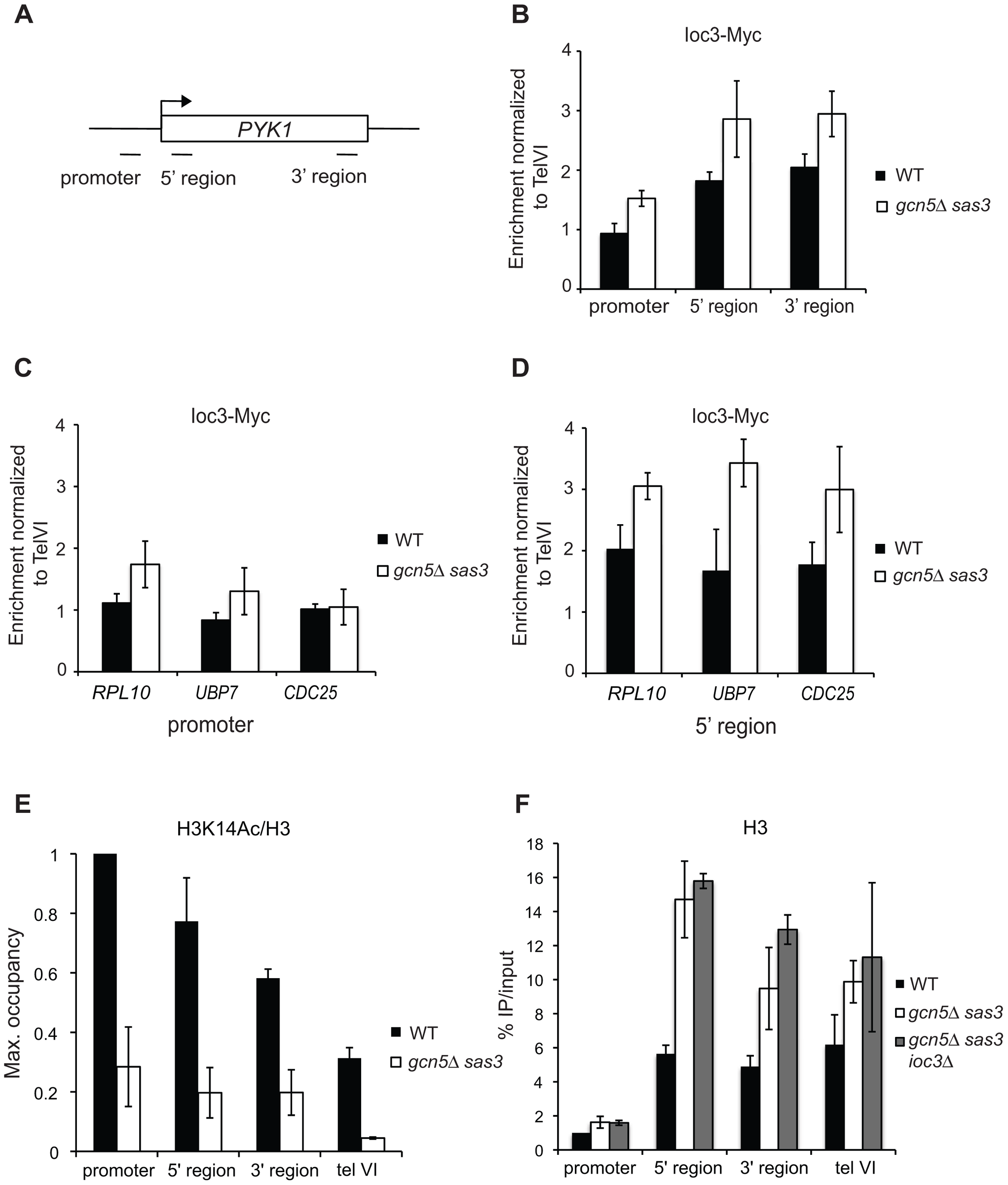Loss of the Sas3 and Gcn5 H3 acetyltransferases modestly alters Isw1a recruitment to chromatin.