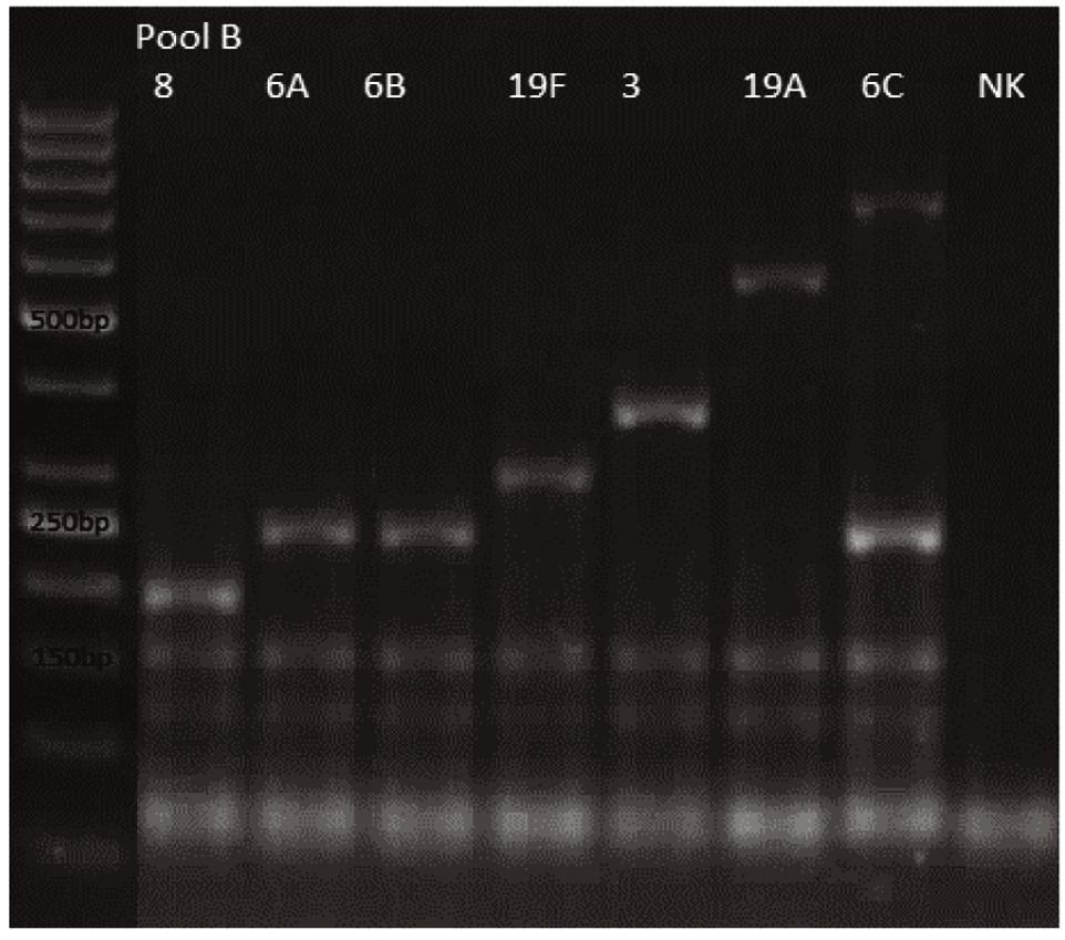 mPCR pool B Dráha 1: 50bp DNA Ladder Dráha 2: <i>S. pneumoniae</i> sérotyp 8 (201bp) Dráha 3: <i>S. pneumoniae</i> sérotyp 6A (250bp) Dráha 4: <i>S. pneumoniae</i> sérotyp 6B (250bp) Dráha 5: <i>S. pneumoniae</i> sérotyp 19F (304bp) Dráha 6: <i>S. pneumoniae</i> sérotyp 3 (371bp) Dráha 7: <i>S. pneumoniae</i> sérotyp 19A (566bp) Dráha 8: <i>S. pneumoniae</i> sérotyp 6C (250bp, 727bp) Dráha 9: negativní kontrola Dráha 2–8: pozitivní produkt cpsA (160bp)<br><br> Fig. 2. mPCR pool B Lane 1: 50bp DNA Ladder Lane 2: <i>S. pneumoniae</i> serotype 8 (201bp) Lane 3: <i>S. pneumoniae</i> serotype 6A (250bp) Lane 4: <i>S. pneumoniae</i> serotype 6B (250bp) Lane 5: <i>S. pneumoniae</i> serotype 19F (304bp) Lane 6: <i>S. pneumoniae</i> serotype 3 (371bp) Lane 7: <i>S. pneumoniae</i>serotype 19A (566bp) Lane 8: <i>S. pneumoniae</i> serotype 6C (250bp, 727bp) Lane 9: negative control Lanes 2–8: positive product cpsA (160bp)