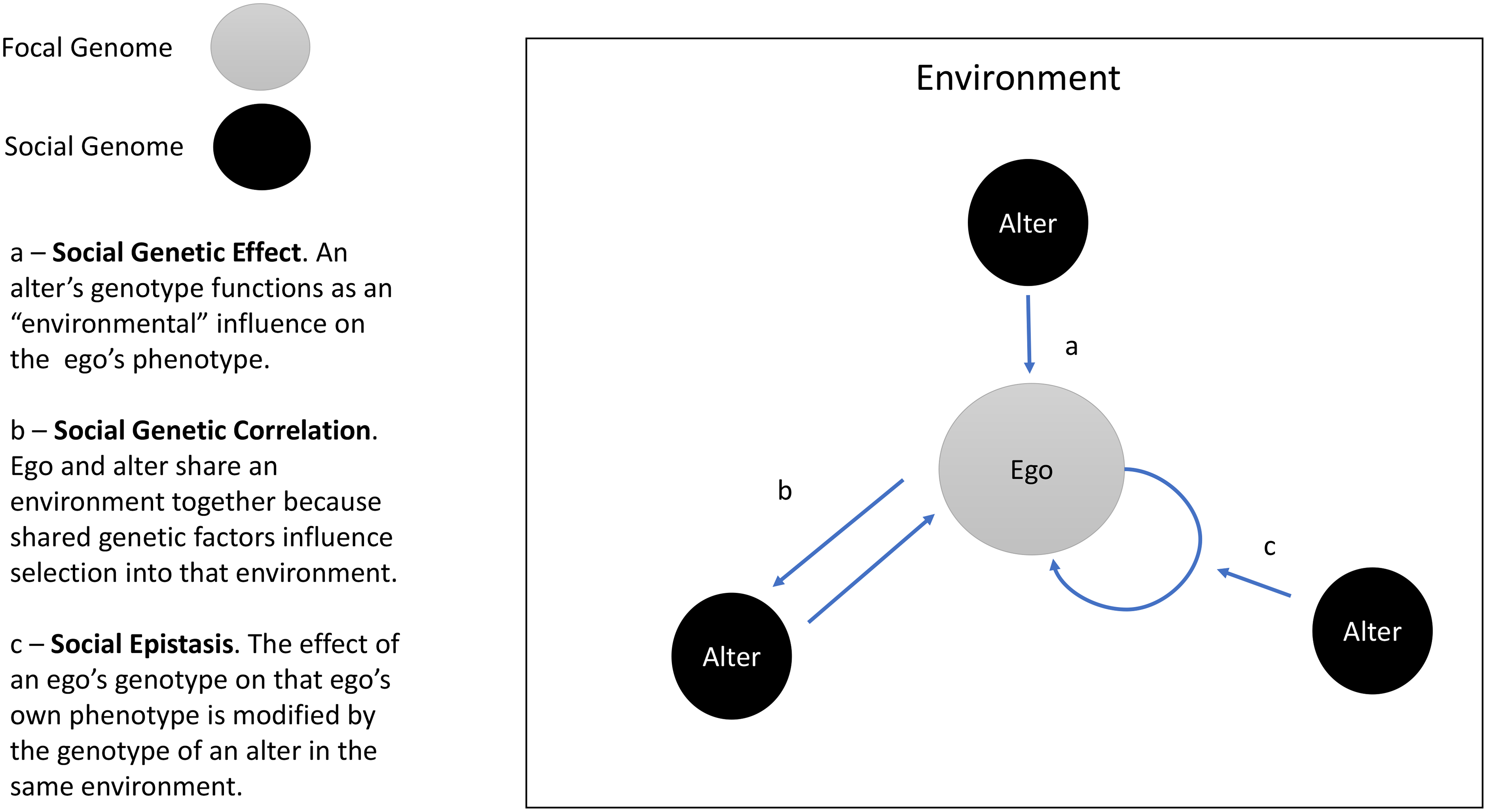 Social Genetic Effects (SGEs), social genetic correlation, and social epistasis.