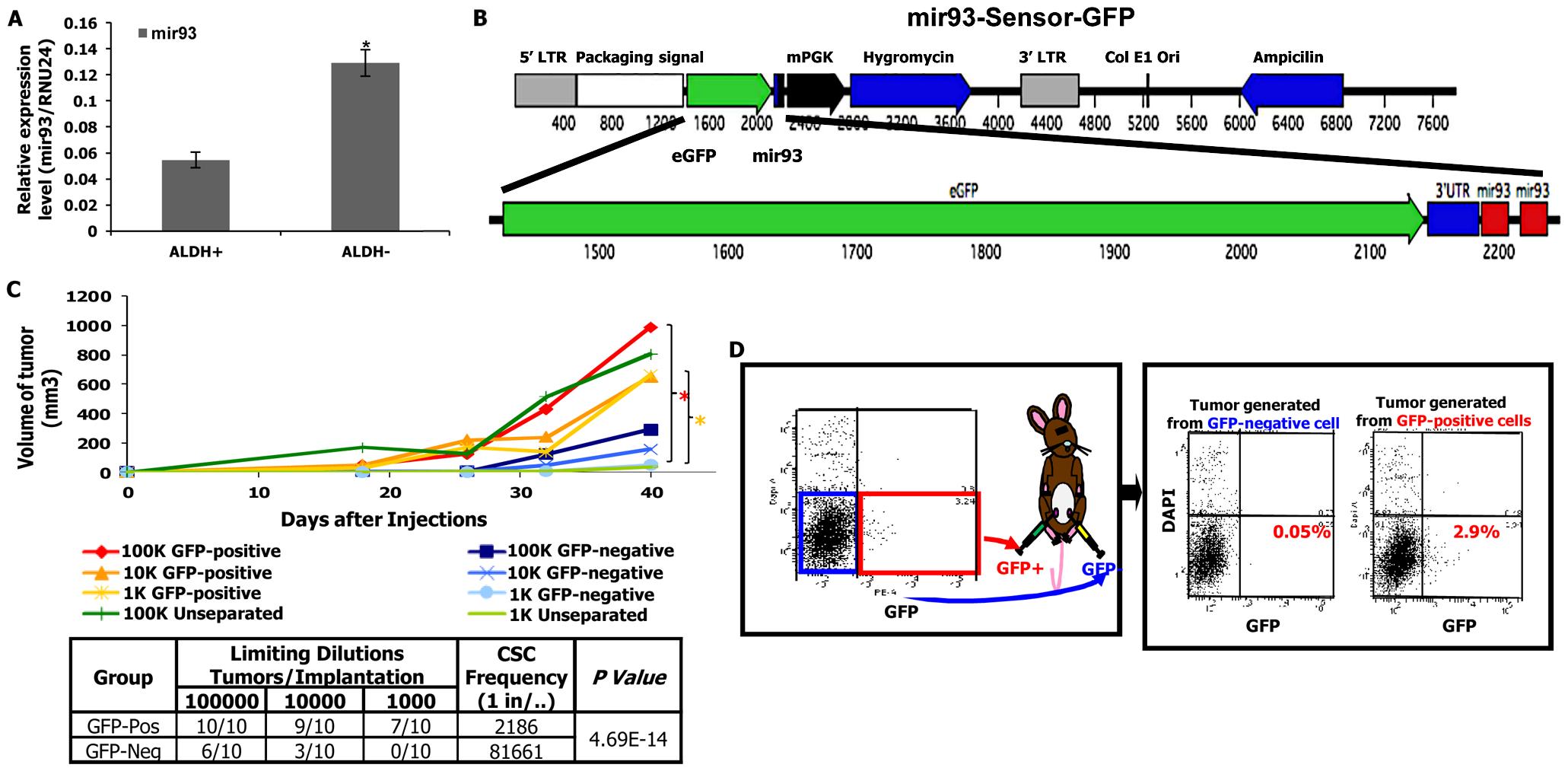 mir-93-negative SUM159 cells have increased tumor-initiating capacity.