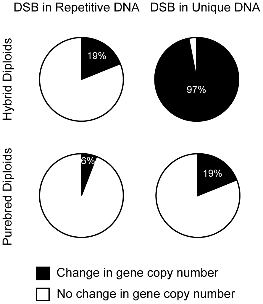 DSBs in unique DNA are more mutagenic than DSBs in repetitive DNA.