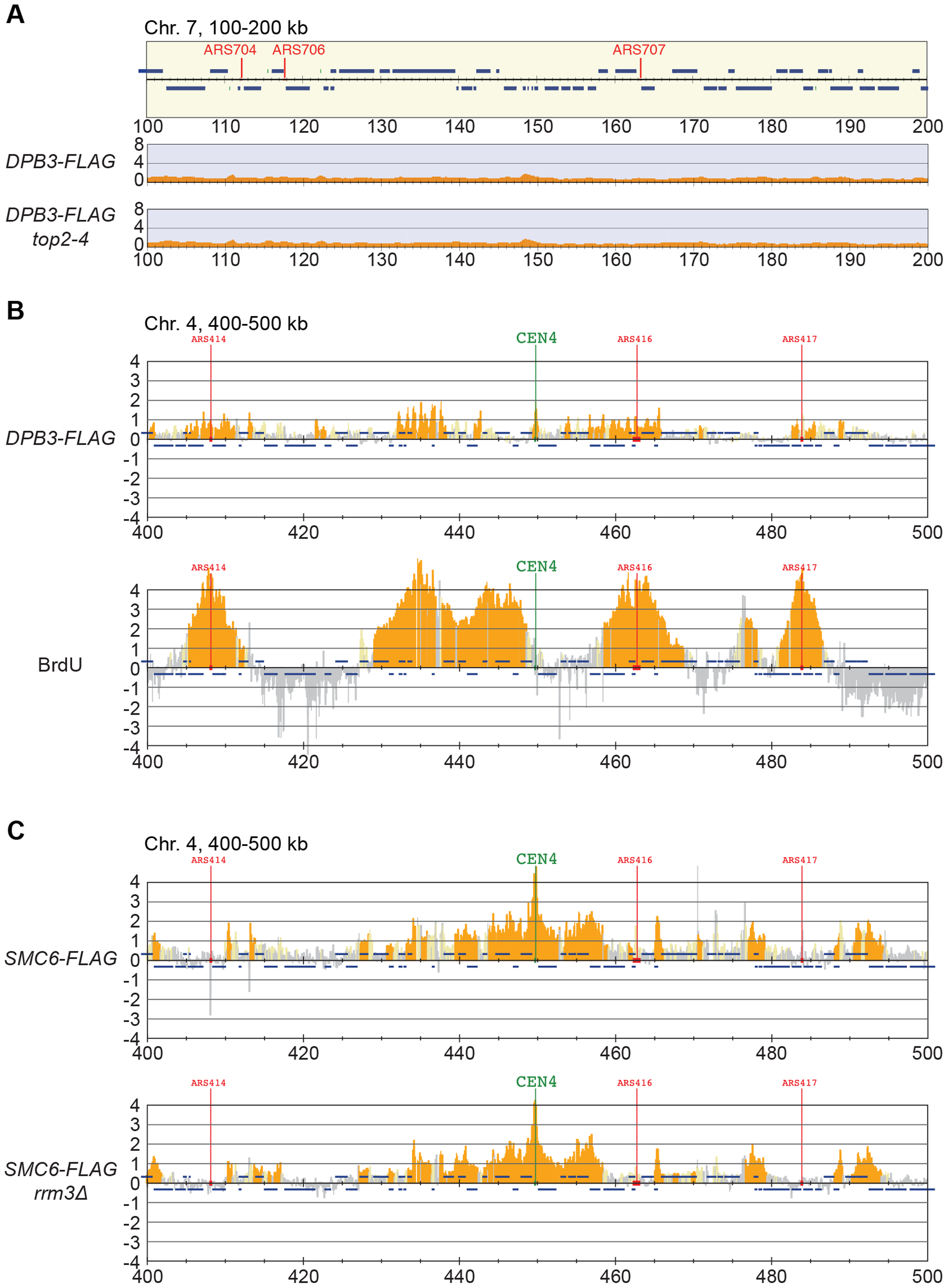 The chromosomal association of Smc6 does not depend on replication fork stalling.